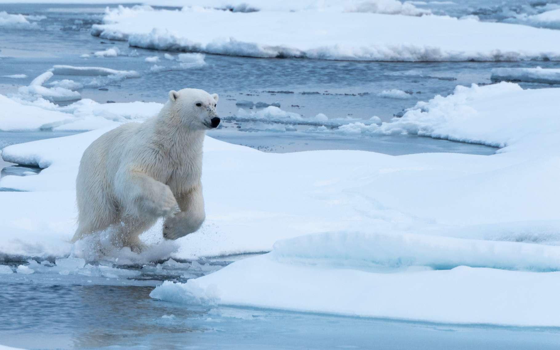 Des travaux d'une équipe pluridisciplinaire et internationale de chercheurs évaluent à quel point la fonte des calottes glaciaires pourrait élever le niveau de la mer. © James Stone, Adobe Stock