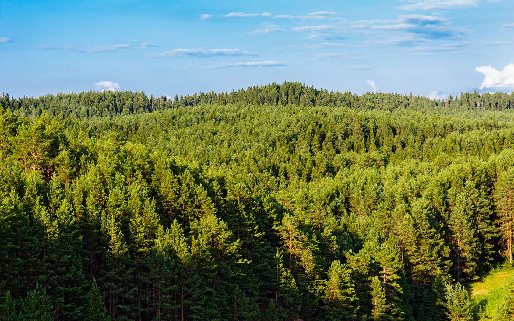 La taïga est une forêt boréale formée principalement de conifères. © Alx_Yago, Fotolia