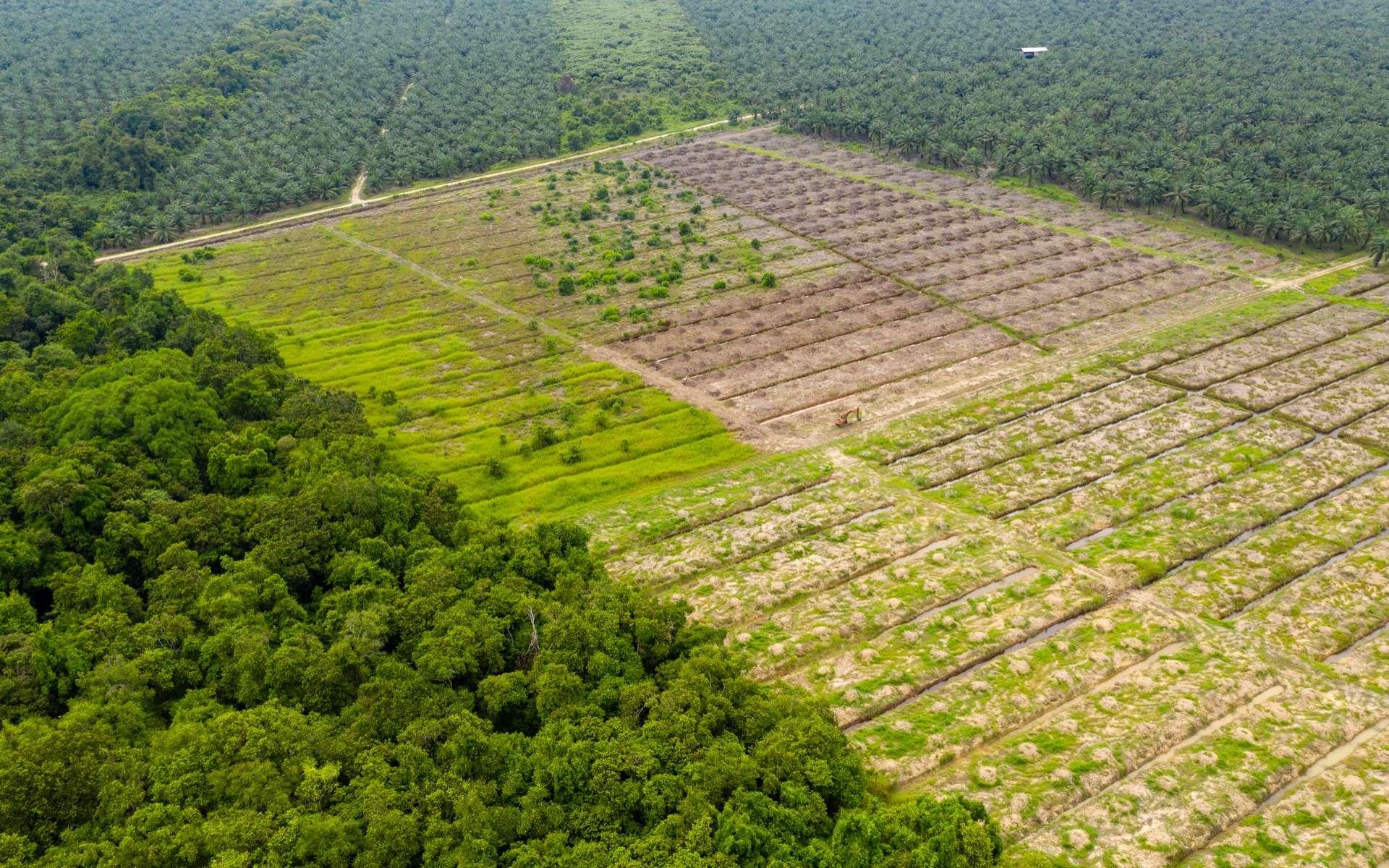 L'Union européenne, comme deuxième importateur mondial de déforestation tropicale. © whitcomberd, Adobe Stock
