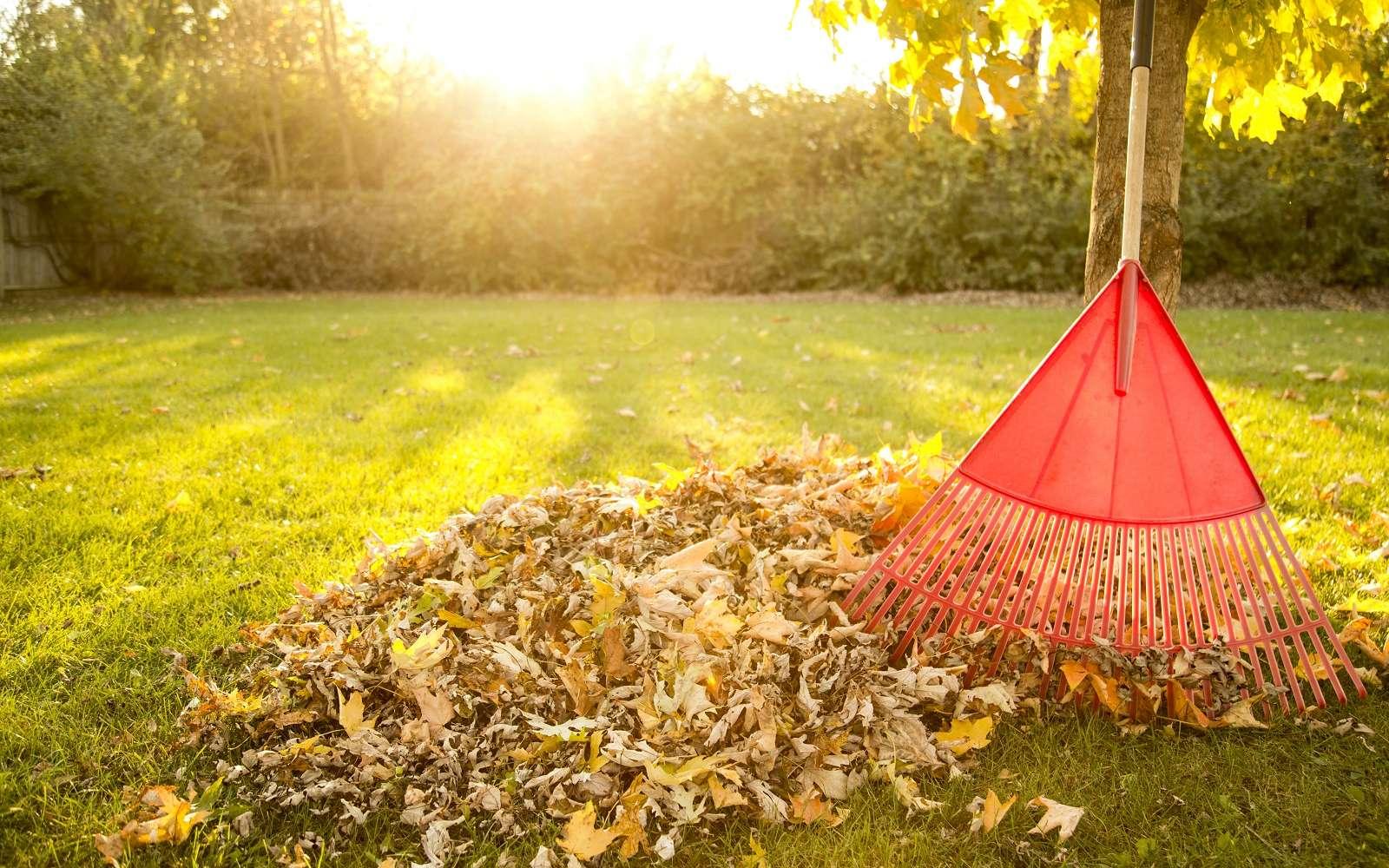 En automne : beaucoup de travaux sont à faire au jardin. © Todd Taulman, Adobe Stock