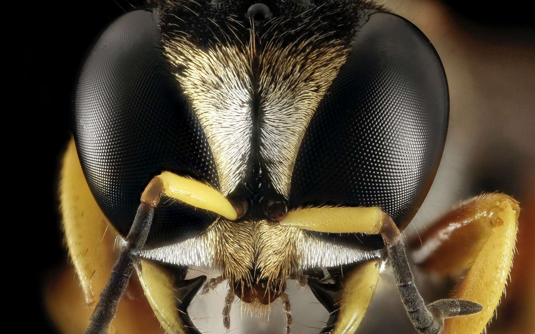Pourquoi il n'existe pas d'insecte géant ? - Futura