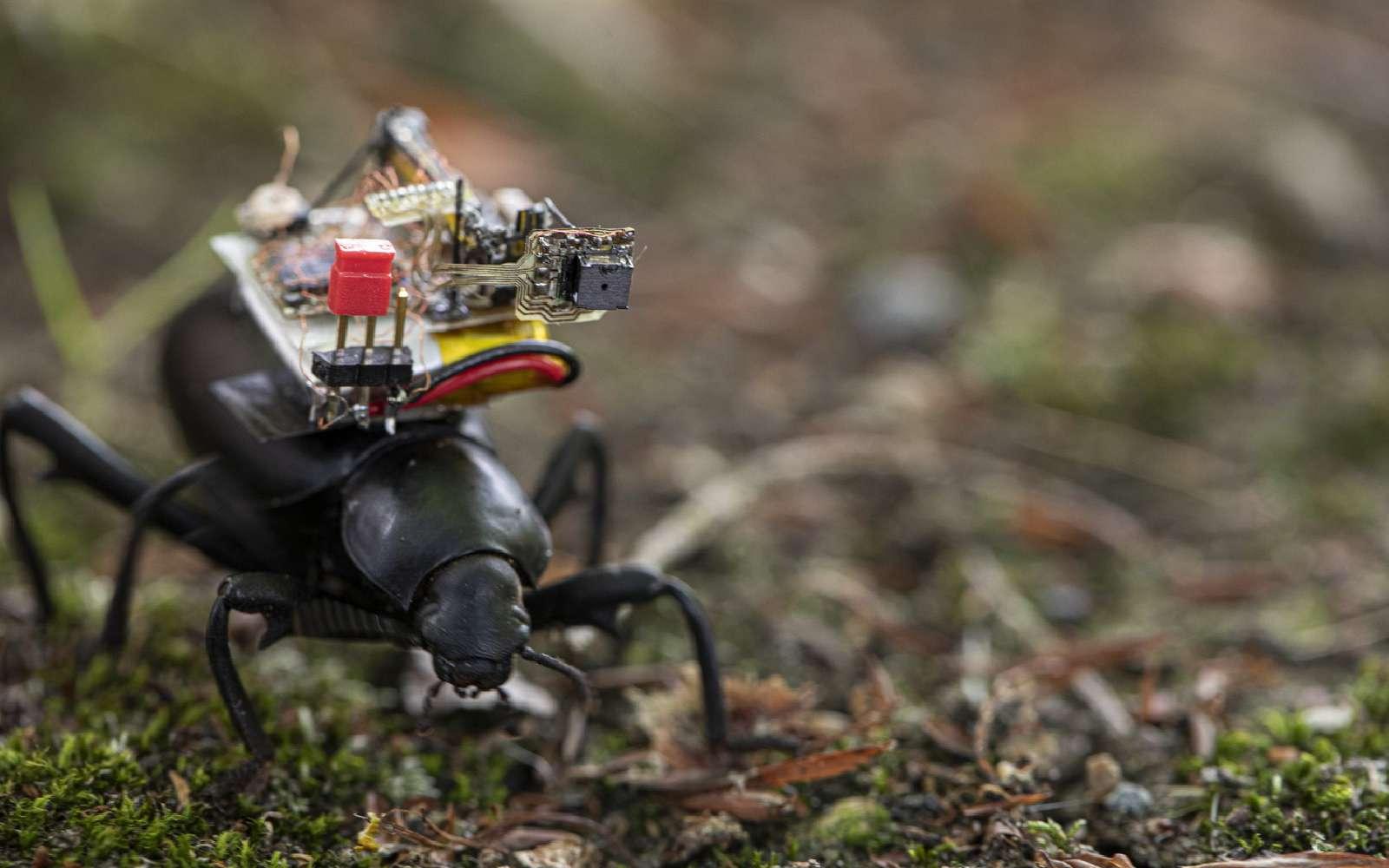 Des chercheurs de l'université de Washington ont créé une caméra qui peut être montée sur un scarabée. © Université de Washington