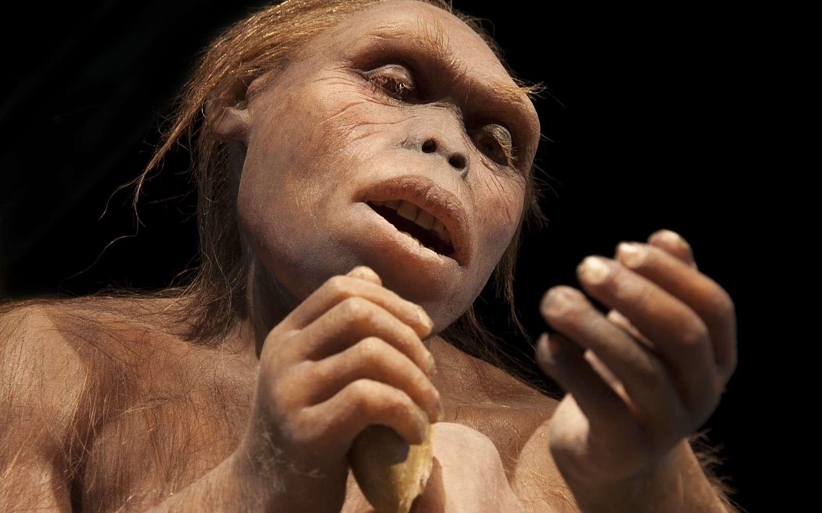 Lucy est le nom d'un australopithèque dont le squelette a été trouvé en Éthiopie. © procy_ab, Fotolia