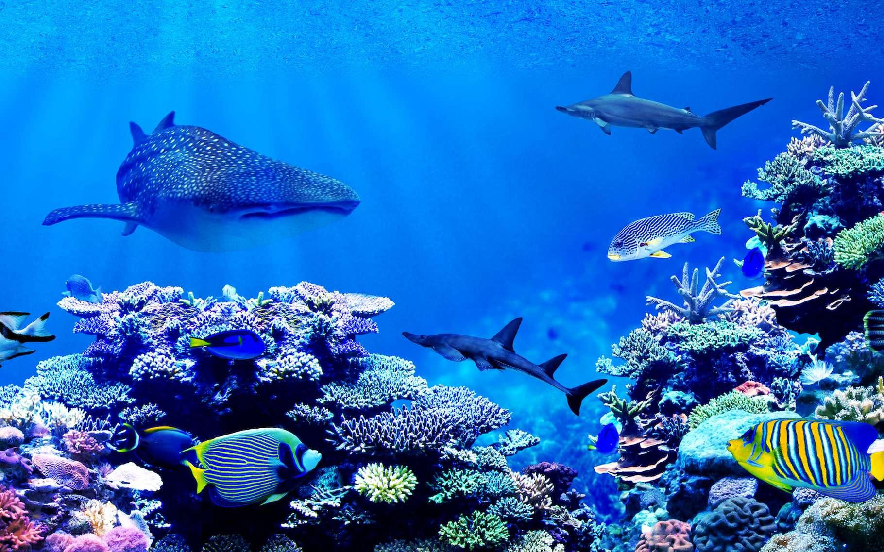 Les animaux marins peuvent désormais trouver refuge dans des sanctuaires créés un peu partout dans le monde. © Chonlasub, Adobe Stock
