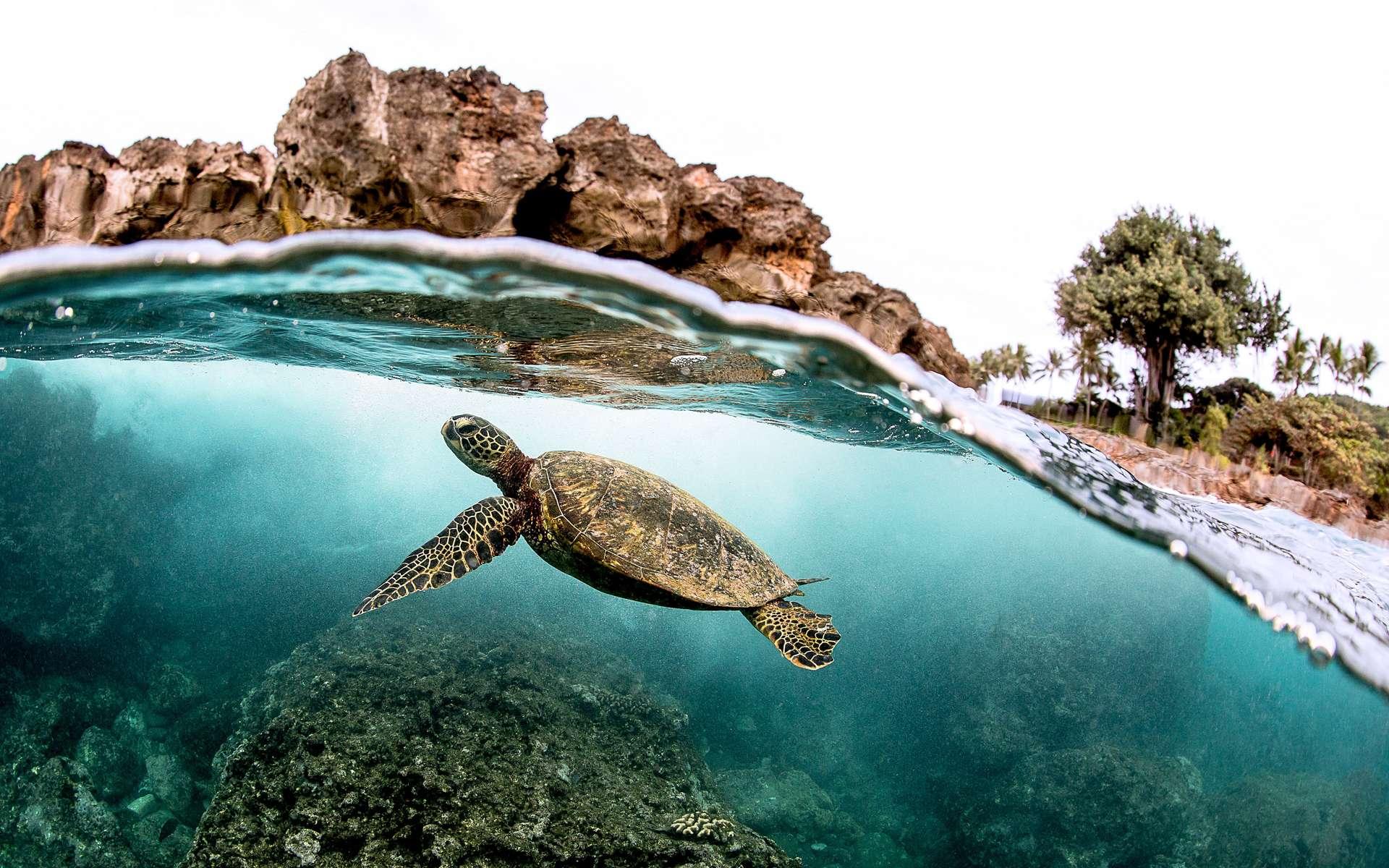 Il existe 343 espèces recensées de tortues. © Ryan, Adobe Stock