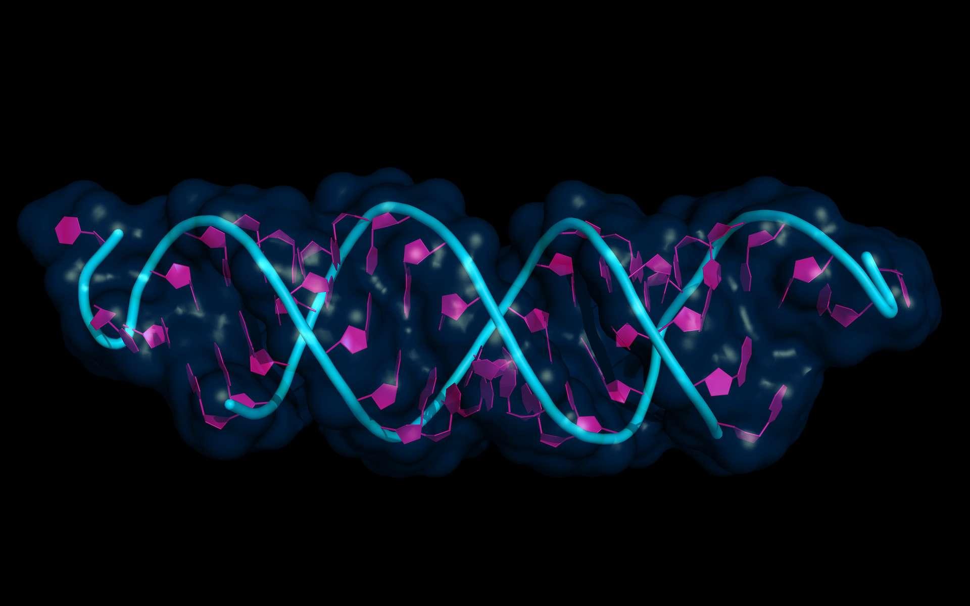 Le microARN se lie à l'ARN du virus pour le désactiver. © petarg, Adobe Stock