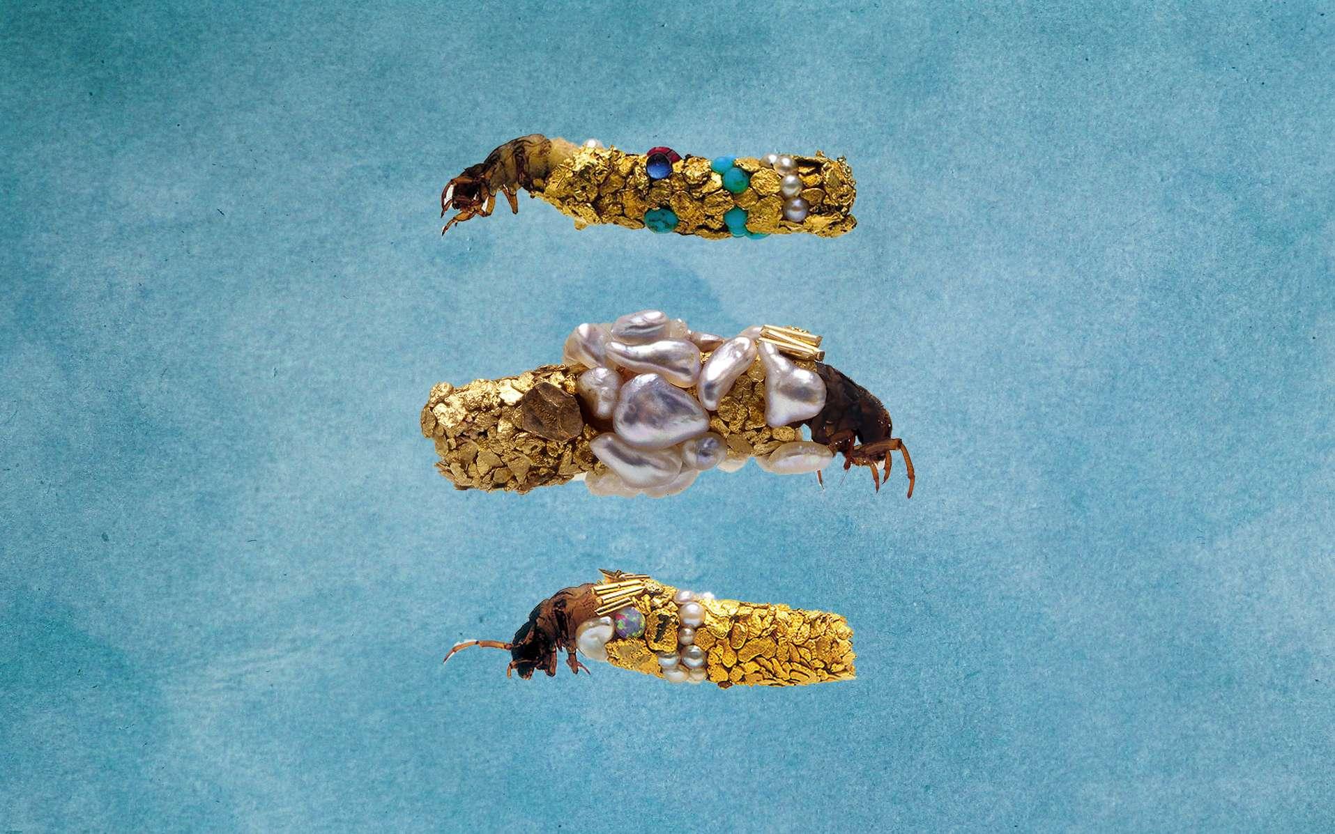 Des larves de phryganes habillées d'or. © Fabrice Gousset, Emma Hollen