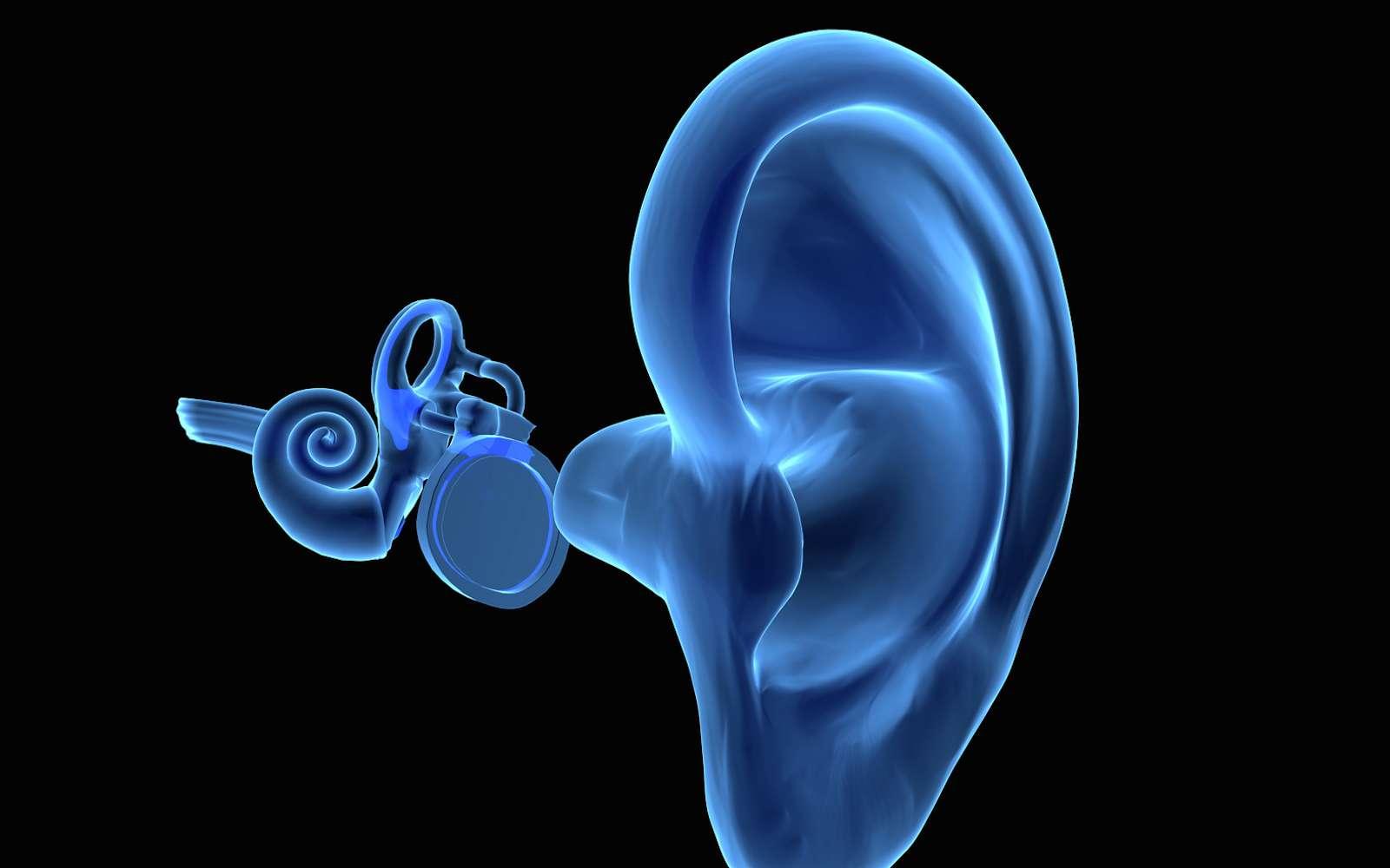 Le tympan est une membrane située entre l'oreille externe et l'oreille moyenne. © goanovi, Fotolia