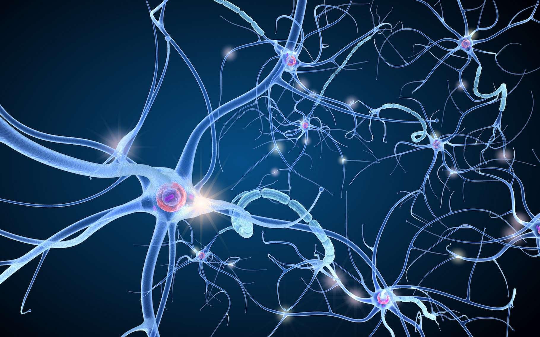 Les neurones sont autant de relais des messages nerveux qui circulent dans notre cerveau. Grâce à des neurones artificiels, comme ceux proposés par les chercheurs de l'université de Bath (Royaume-Uni), de toutes nouvelles perspectives thérapeutiques pourraient être envisagées. © Alexandr Mitiuc, Adobe Stock
