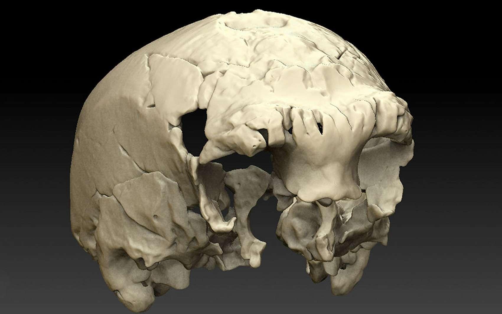 Ce crâne reconstitué sur ordinateur est celui d'un humain vieux de 400.000 ans. Il présente des caractéristiques de néandertaliens mais aussi d'hominidés plus anciens. © Uniarq