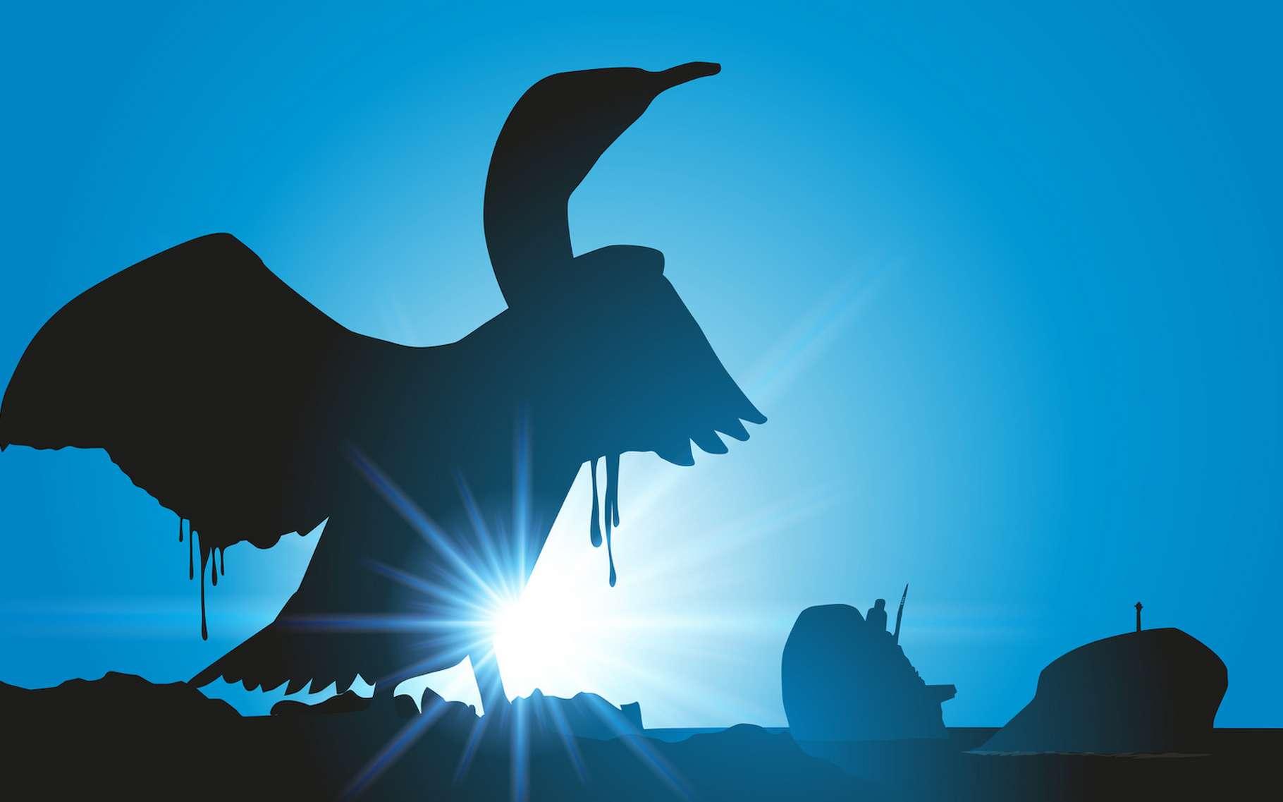 Démazouter un oiseau est une procédure longue et délicate et si certains doutent de son efficacité et prônent l'euthanasie, d'autres croient en leurs efforts et qualifient l'euthanasie systématique de solution de facilité. © pict rider, Fotolia
