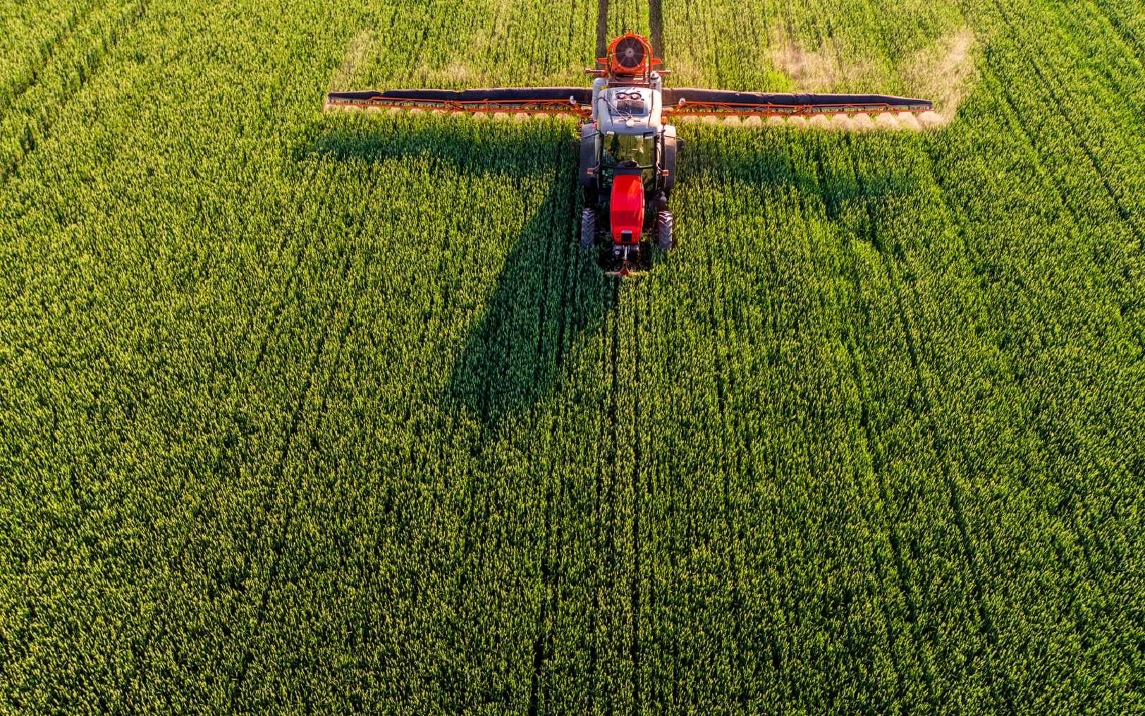 Le glyphosate est l'herbicide le plus utilisé au monde. © oticki, Fotolia