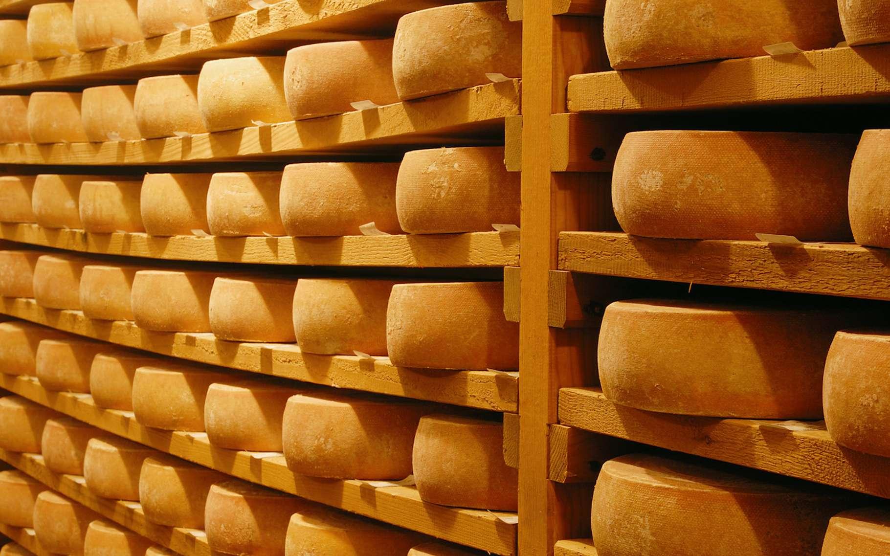 Science décalée : la musique change-t-elle le goût du fromage ?