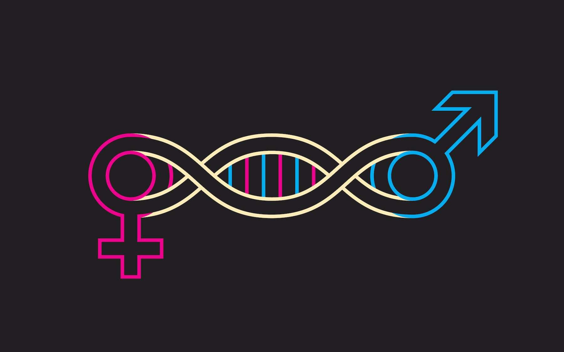 Les gènes s'expriment de façon plus ou moins importante chez les hommes et chez les femmes. © igor kisselev, Adobe Stock