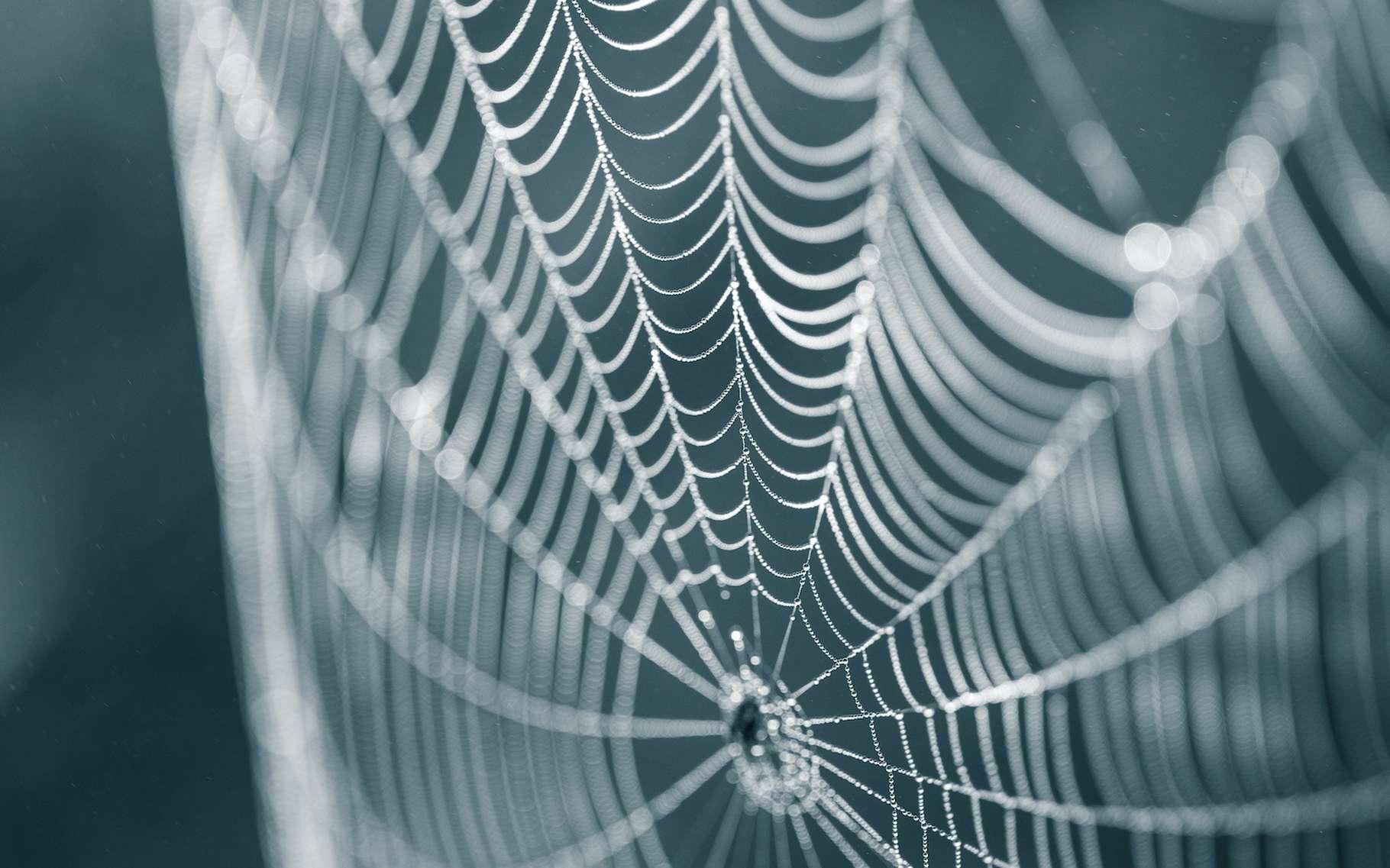 Des chercheurs de l'université de Washington à Saint-Louis (États-Unis) sont parvenus à obtenir une soie plus performante que la soie d'araignée naturelle. © dachux21, Adobe Stock