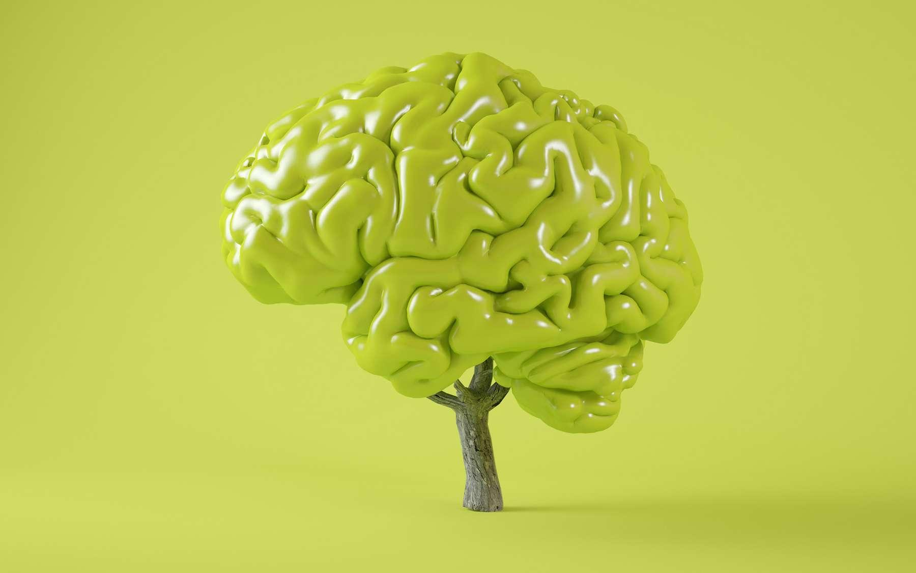 Comme pour un arbre, le cerveau élimine en permanence les synapses excédentaires. © MclittleStock, Adobe Stock