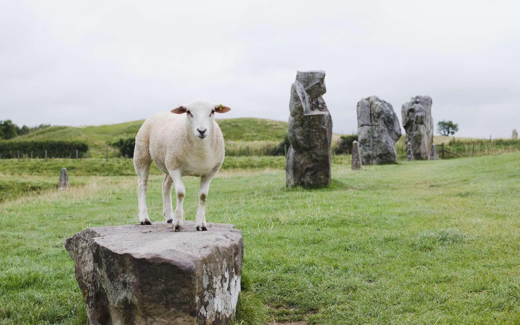 Un mouton sur un rocher. © mirekpesek, Fotolia