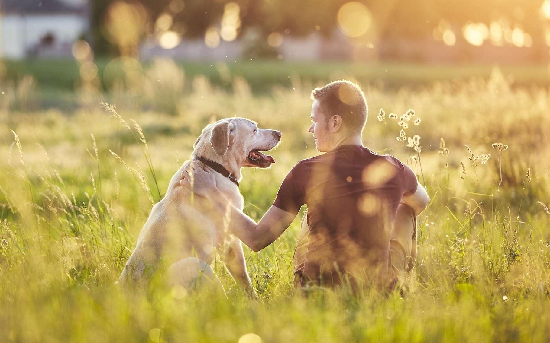 Pour communiquer avec l'être humain, le chien utilise essentiellement le langage corporel et les expressions faciales. Des expressions que les humains doivent apprendre à comprendre, nous expliquent aujourd'hui des chercheurs du Max Planck Institute (Allemagne). © chalabala, Adobe Stock