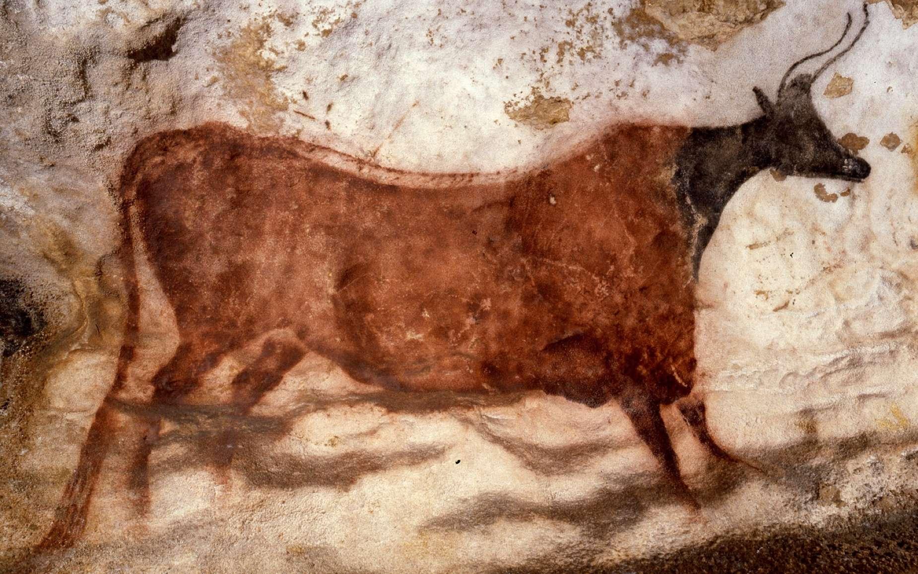 Représentation d'un taureau dans la grotte de Lascaux. © Lascaux