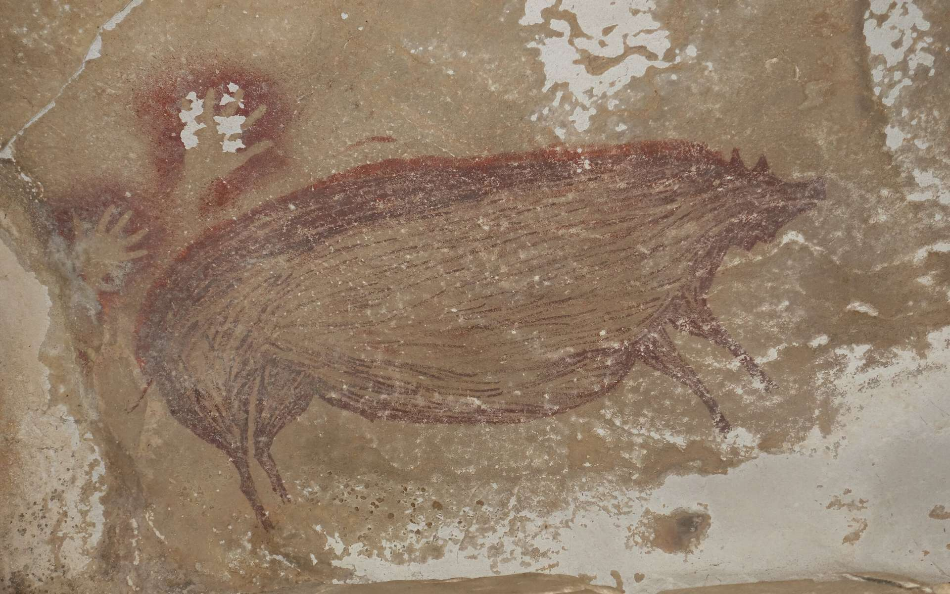 Ce dessin qui représente un sanglier de Célèbes date d'au moins 45.500 ans. © Maxime Aubert