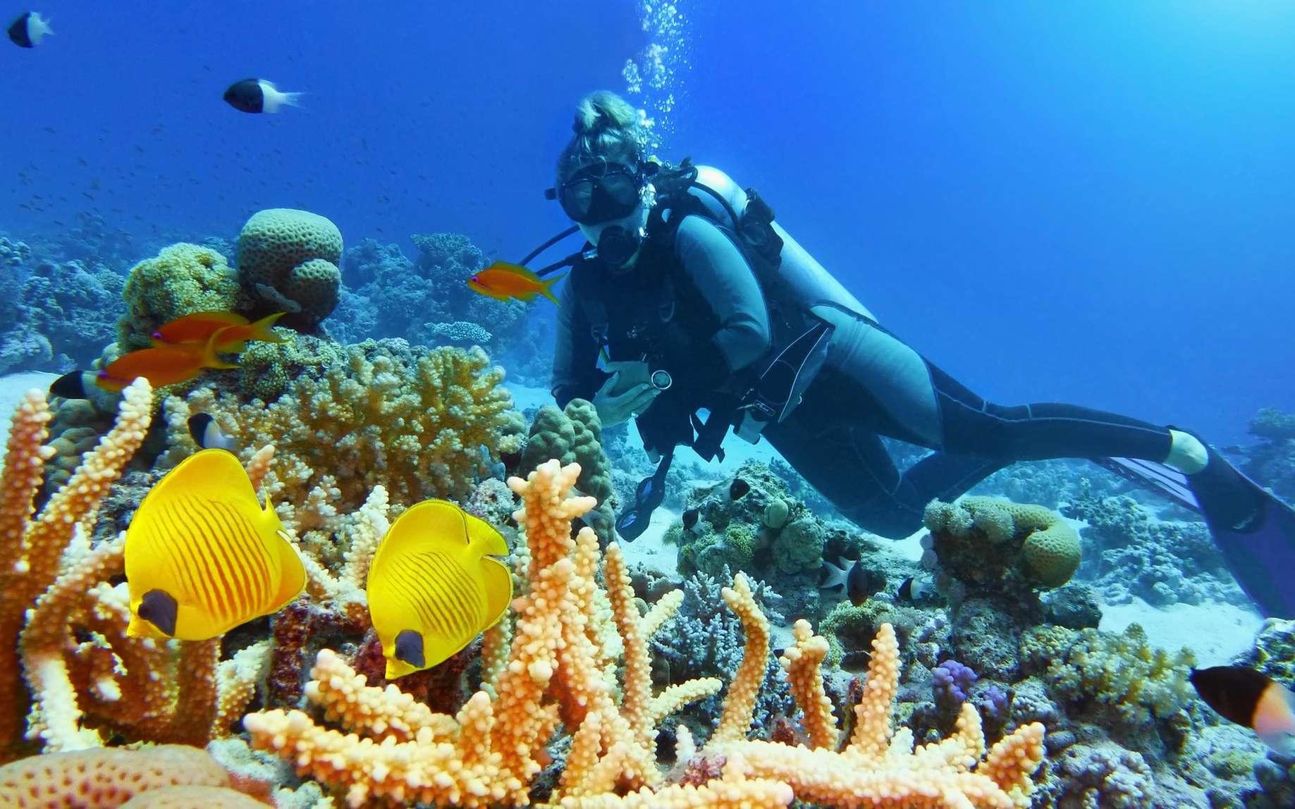 En mer Méditerranée, de nombreuses espèces sont menacées d'extinction et sont donc protégées. © Tunatura, Fotolia