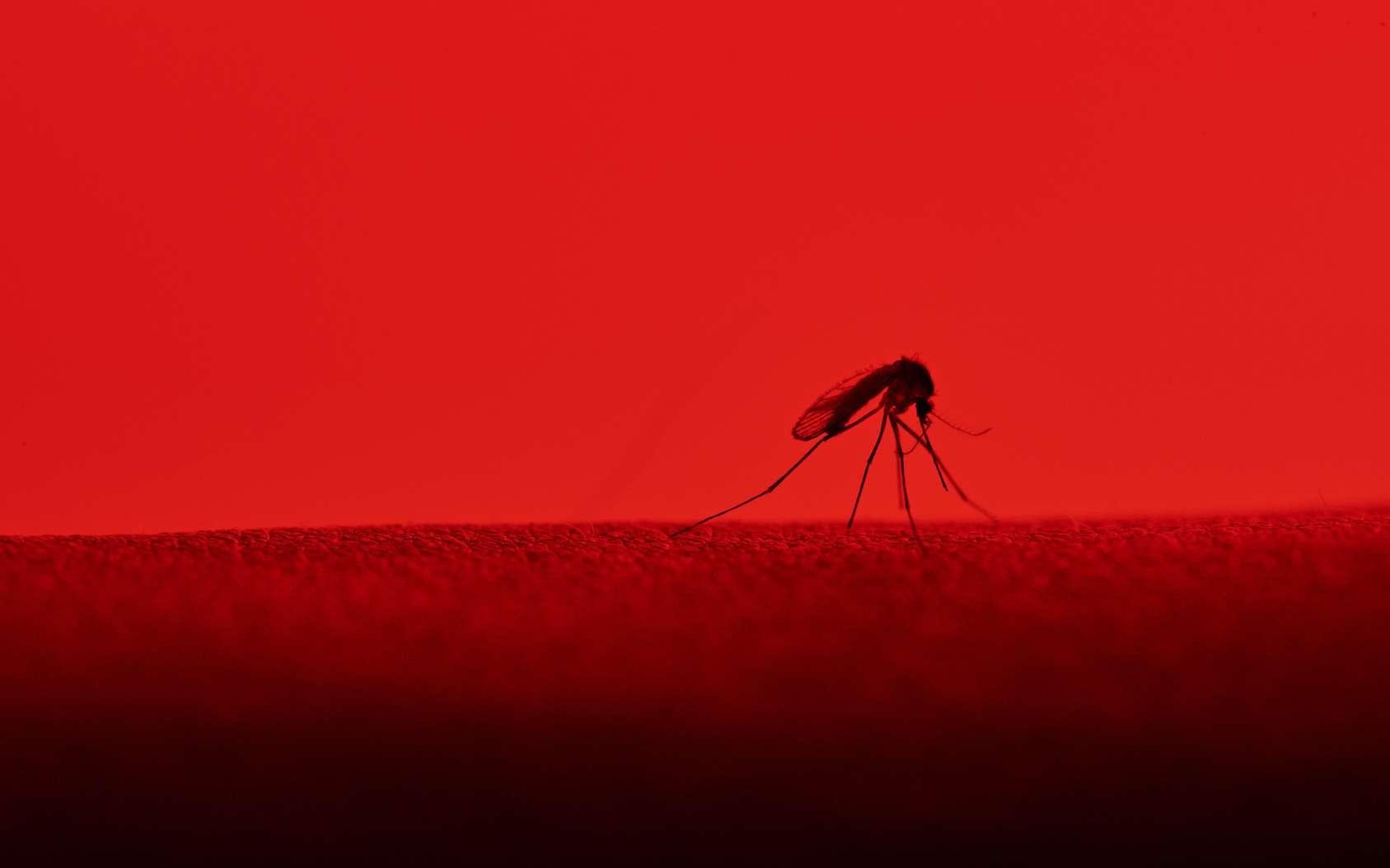 Un moustique en train d'aspirer le sang d'un humain. © PixieMe, Fotolia