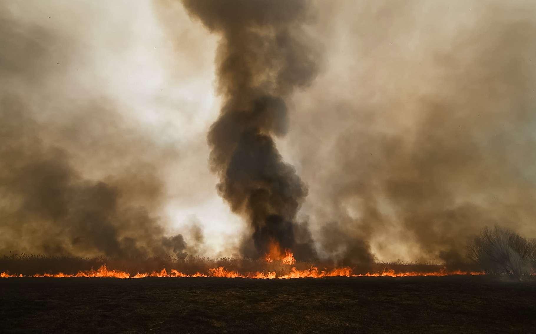 Comme on l'a déjà vu du côté de l'Australie il y a quelques mois, une météo chaude et sèche associée à de forts vents est propice, en Sibérie, à la propagation de feux de forêt. © Ludmila, Adobe Stock