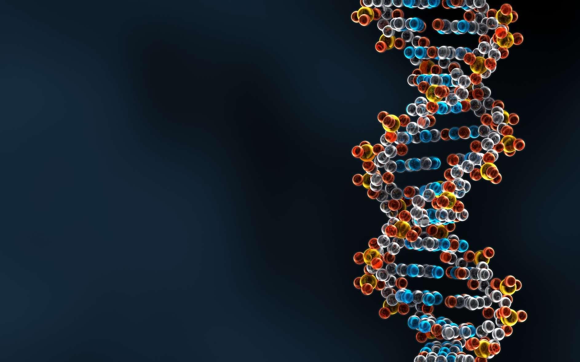 Les désoxyriboses sont présents dans les « montants » de l'échelle d'ADN, les basses appariées forment les barreaux. © Forance, Fotolia