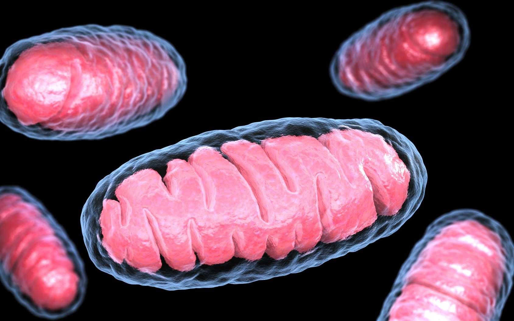 Les mitochondries sont les usines énergétiques des cellules. © Tatiana Shepeleva, Fotolia