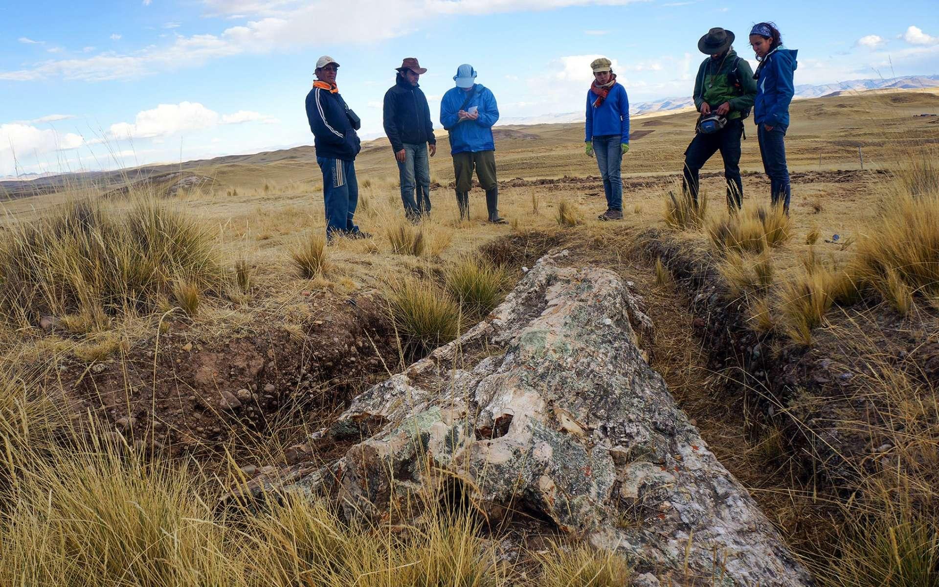 L'équipe de scientifique du Smithsonian Tropical Research Institute à côté du tronc fossilisé découvert dans sur le plateau des Andes au Pérou. © Rodolfo Salas Gismondi