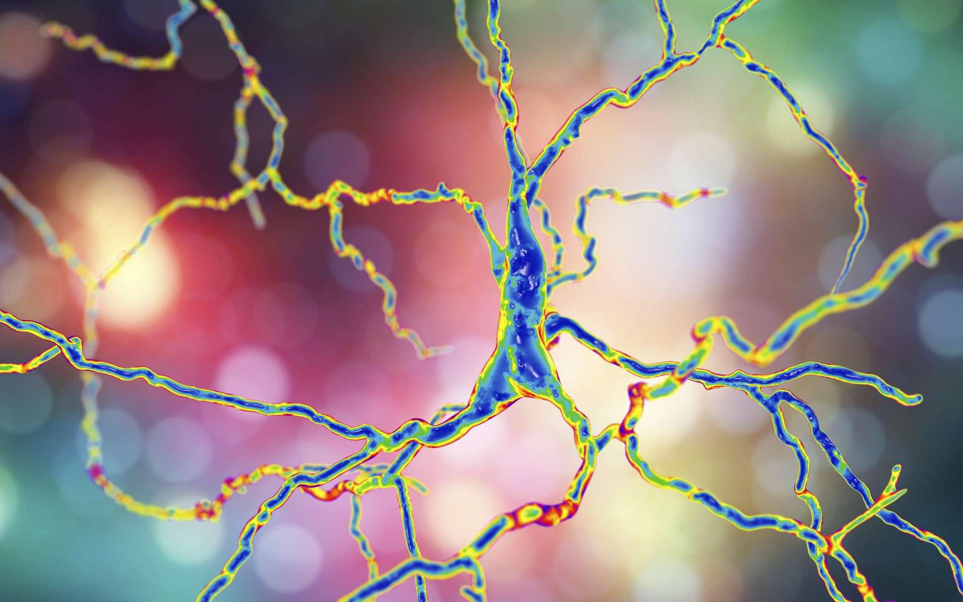 Représentation de neurones dopaminergiques: le dysfonctionnement de ces cellules nerveuses est responsable de la maladie de Parkinson. © Kateryna_Kon, Adobe Stock