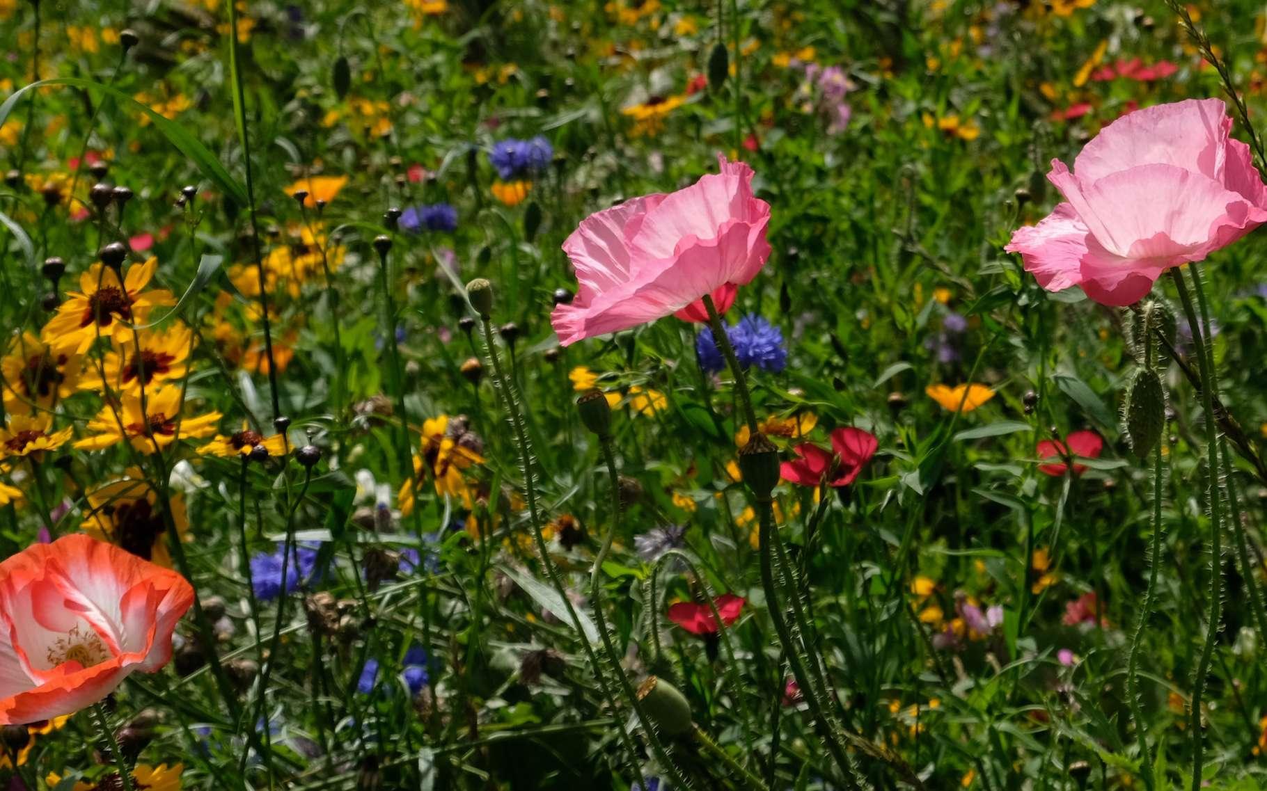 Selon les chercheurs, le secret des hotspots de biodiversité résiderait dans une exceptionnelle stabilité climatique. © Lois GoBe, Adobe Stock