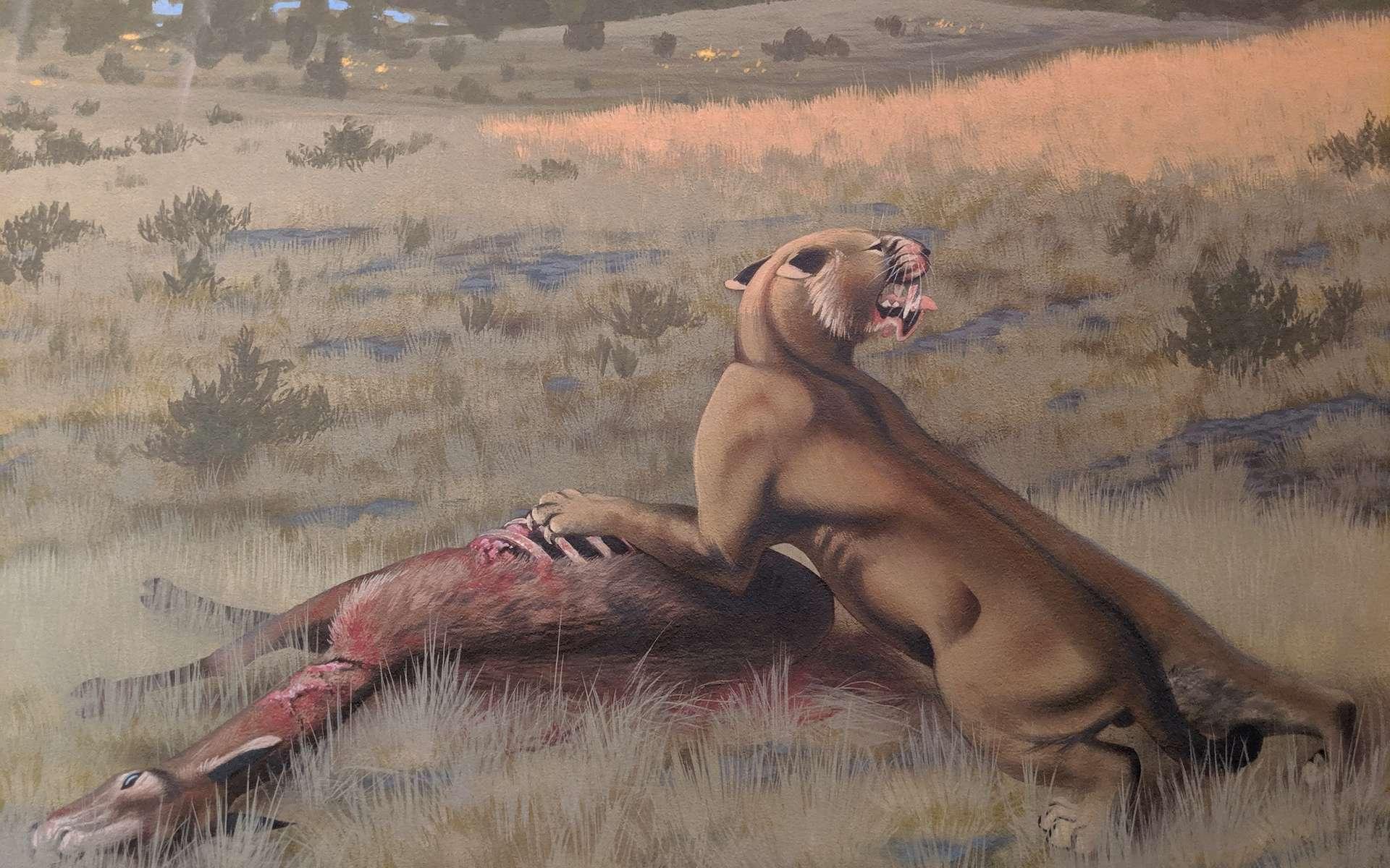 Représentation artistique d'un Machairodus lahayishupup mangeant un Hemiauchenia, un parent du chameau. L'image fait partie d'une peinture murale de la formation Rattlesnake dans le centre de l'Oregon, où des fossiles de l'espèce nouvellement identifiée ont été trouvés. La fresque est exposée au John Day Fossil Beds National Monument. © Roger Witter