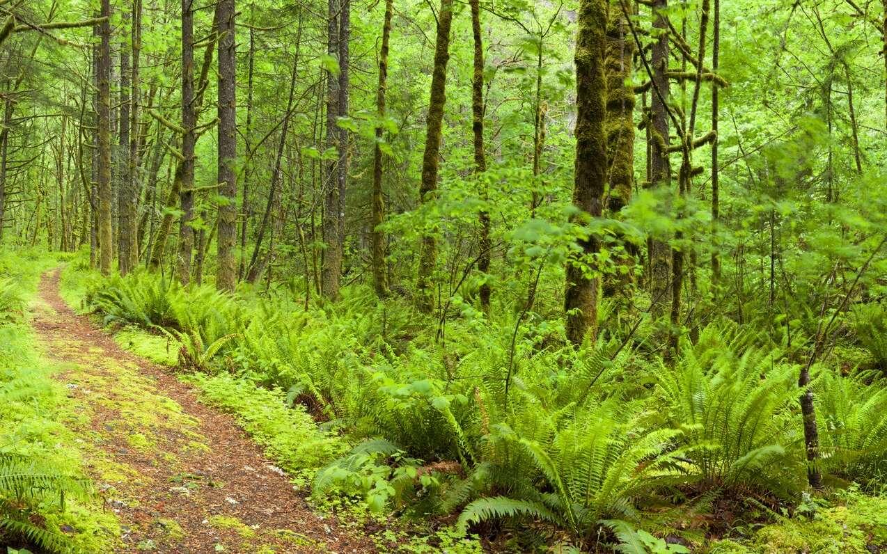 Dans la forêt, les plantes se parlent. © sara_winter, Fotolia