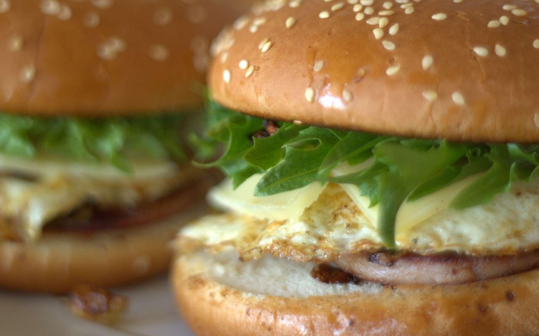 Les plats que l'on trouve dans les fast-foods sont souvent considérés comme relevant de la malbouffe. La graisse, les sucres et le sel qu'ils contiennent sont généralement nocifs pour la santé. © Lauri Rantala, Flickr, CC by 2.0