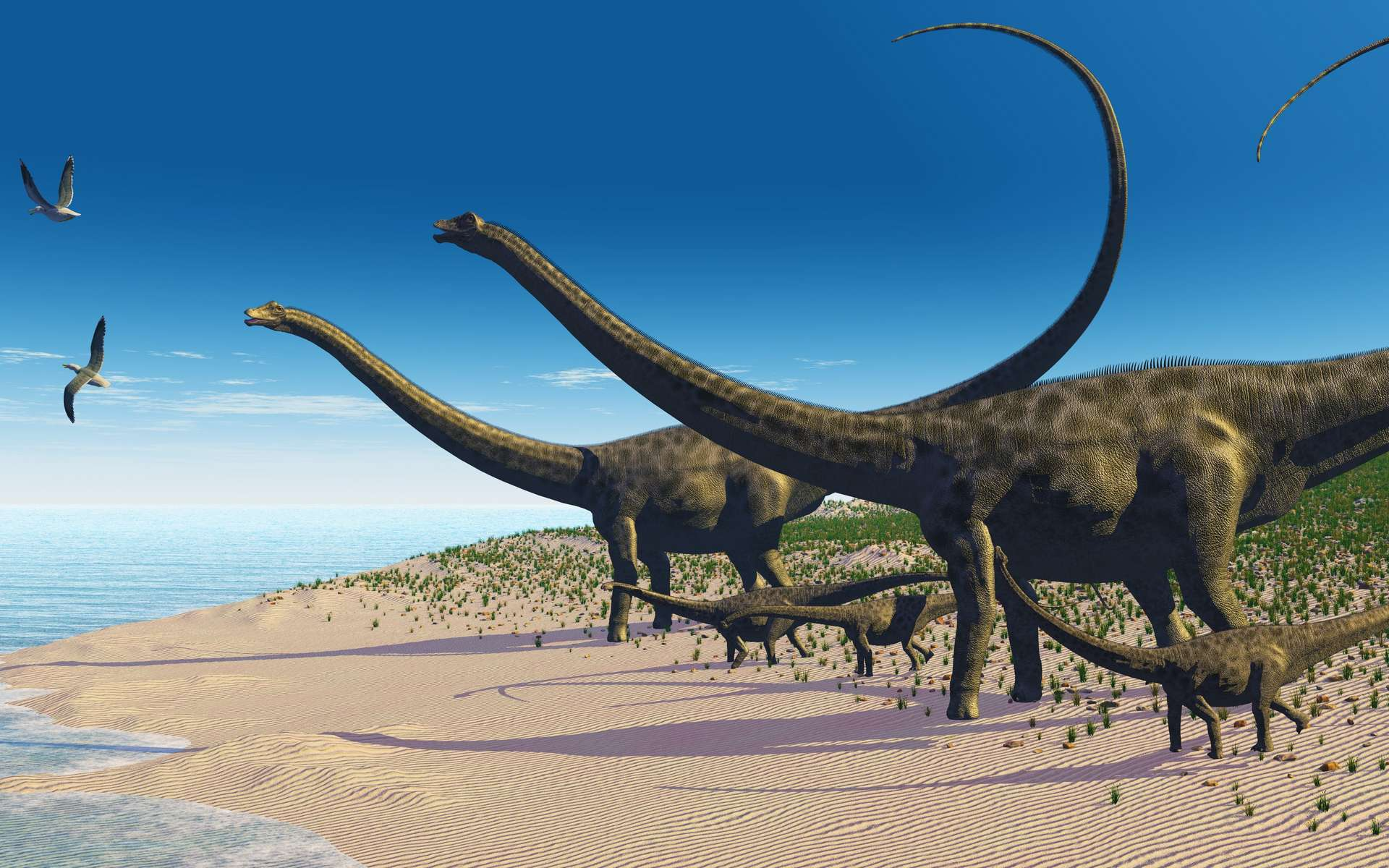 Reconstitution d'un troupeau de Diplodocus, à partir des empreintes de Courtedoux. © Catmando, Adobe Stock
