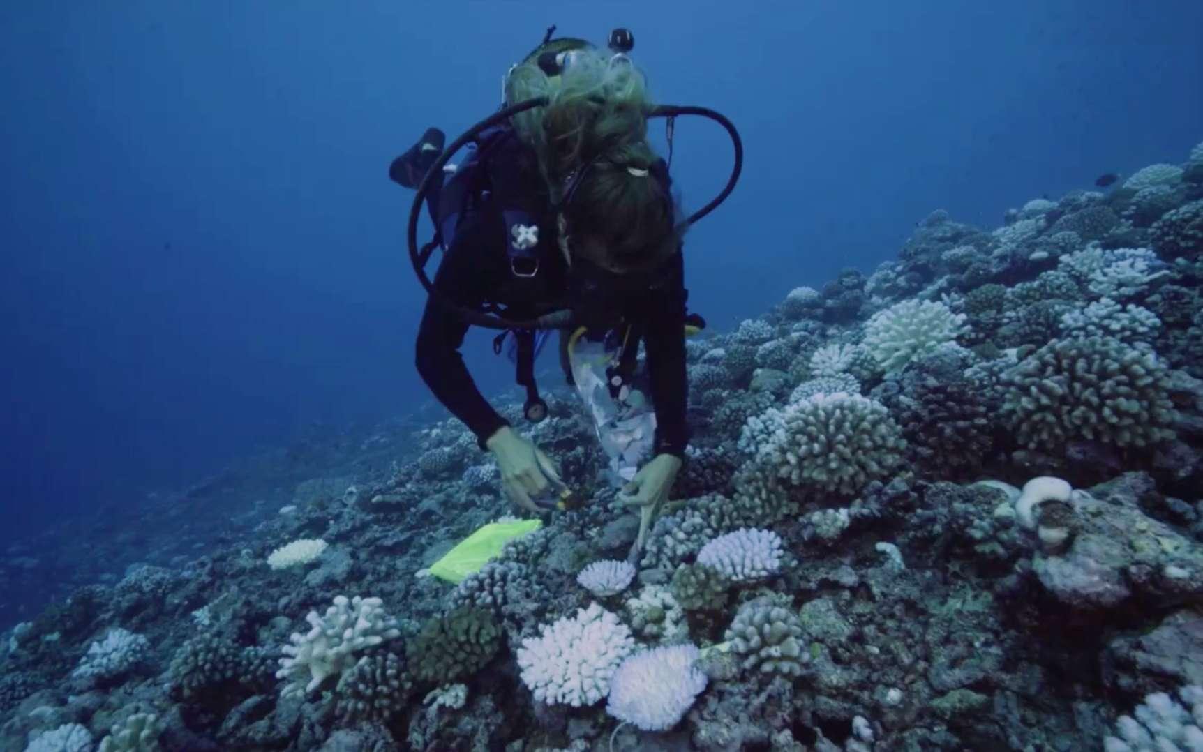 Vidéo : la vie sous-marine prospère malgré le réchauffement des océans