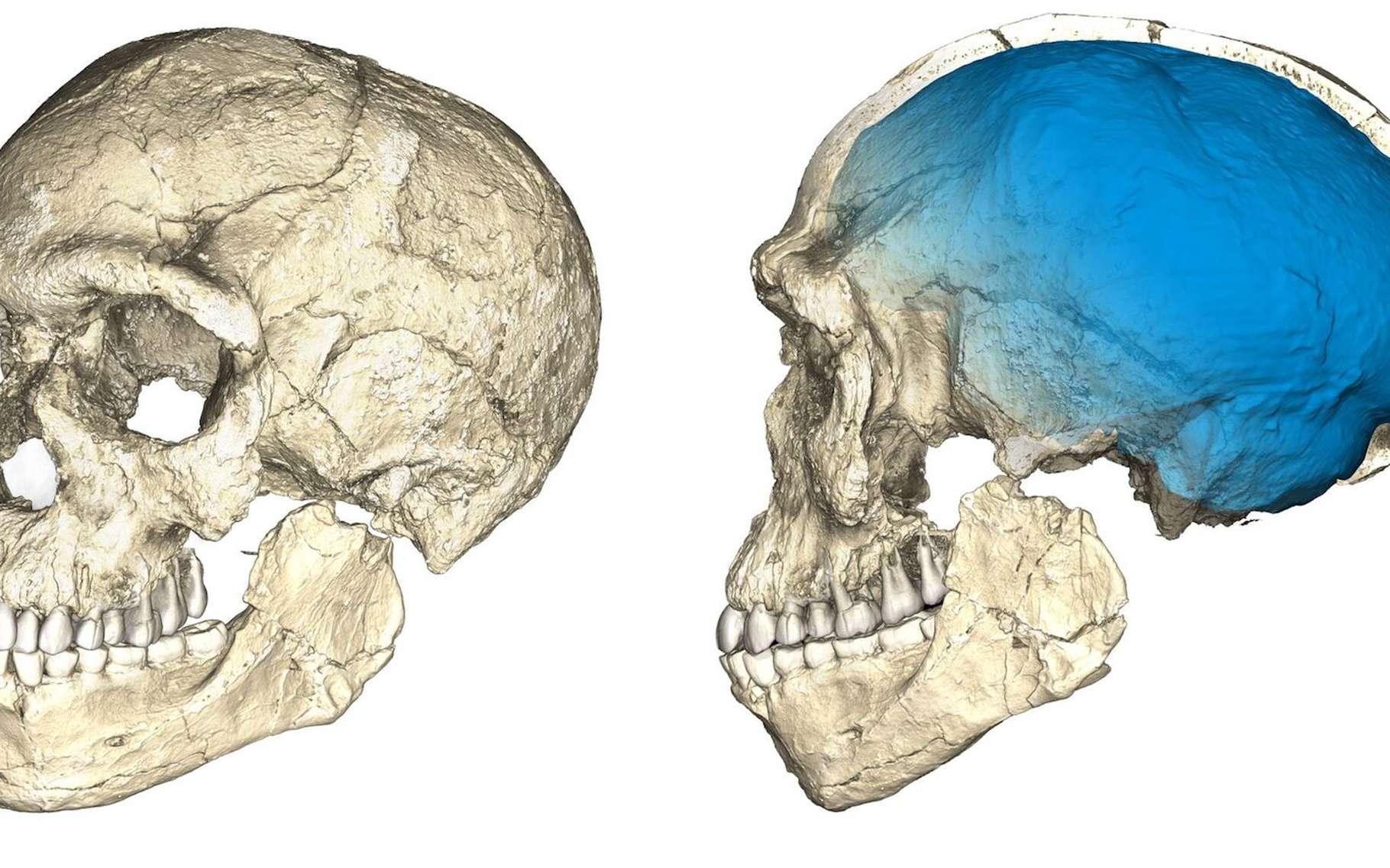 Des découvertes de restes d'Homo sapiens sur un site marocain laissent à penser que l'émergence de l'Homme moderne est plus ancienne que prévu et qu'il s'agit d'un phénomène panafricain. © Philipp Gunz, MPI EVA Leipzig, CC by-SA 2.0