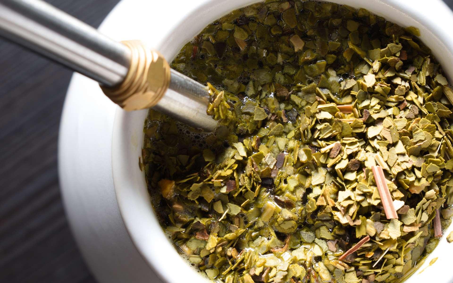 Le maté, une boisson obtenue à partir de feuilles de l'arbuste yerba maté. © equos, Adobe Stock