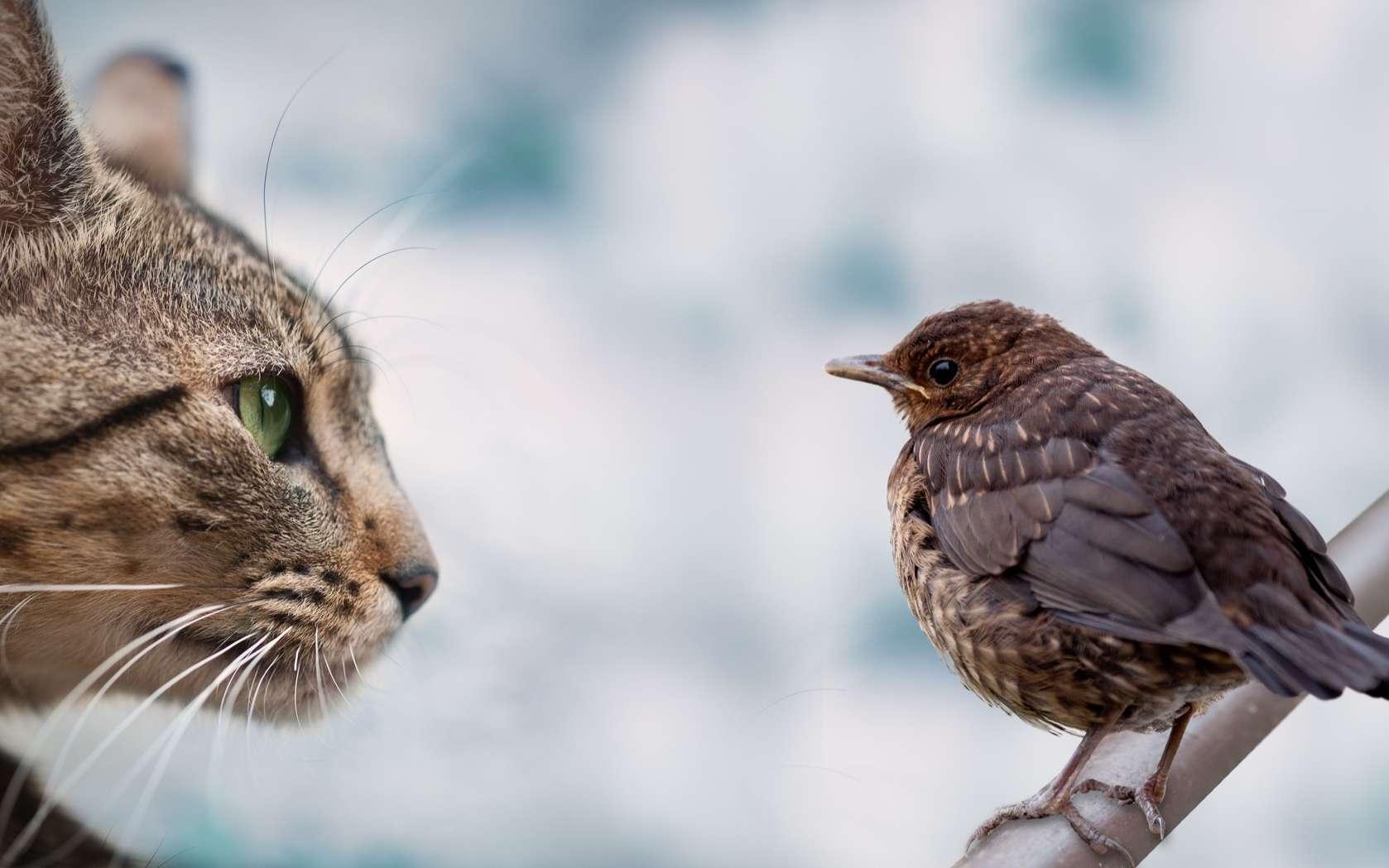 L'alimentation du chat nourrit-elle son instinct de prédateur ? © zmijak, Adobe Stock