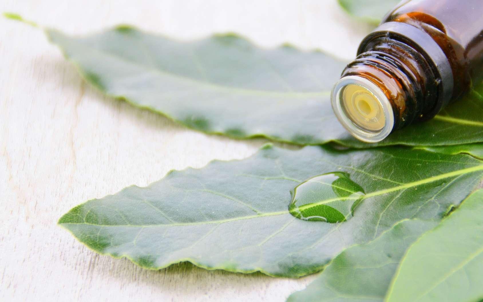 L'huile essentielle de laurier noble concentre les bienfaits de cet arbuste méditerranéen. Elle stimule le système digestif ainsi que la pousse des cheveux. © Patryssia, Fotolia