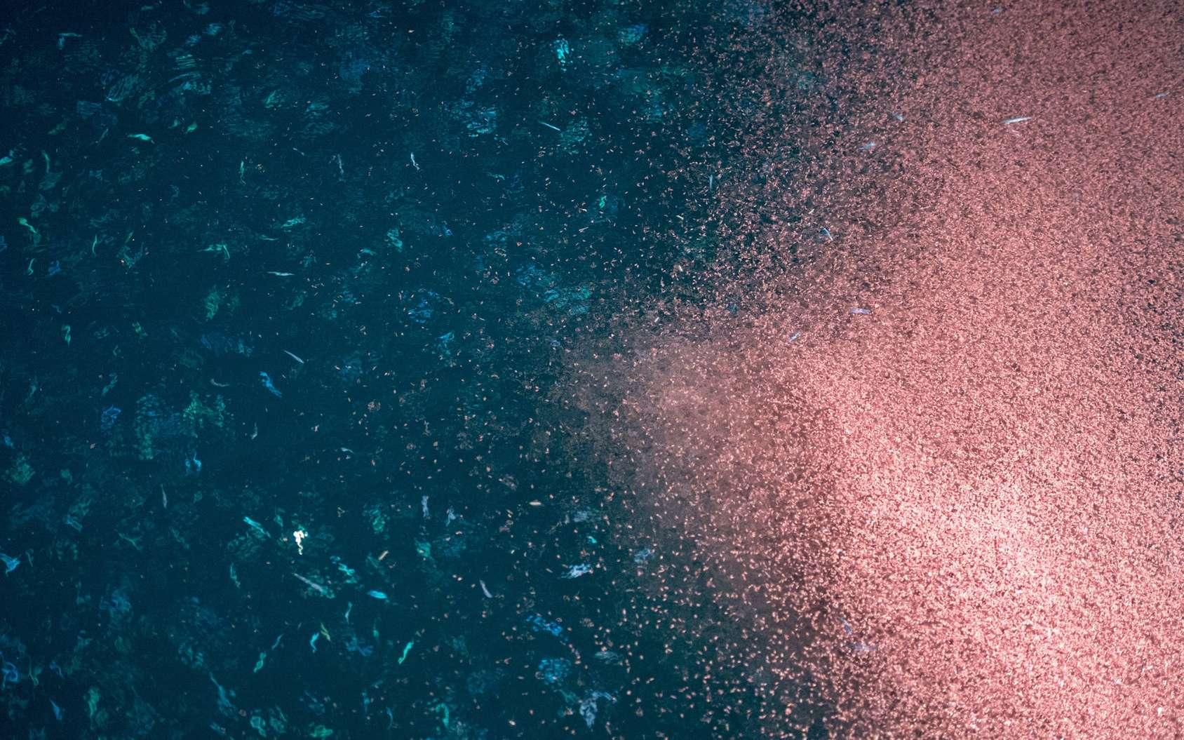 Le déplacement de millions d'invertébrés du zooplancton crée des turbulences qui provoquent des mouvements non négligeables. © Andrea Izzotti, Fotolia