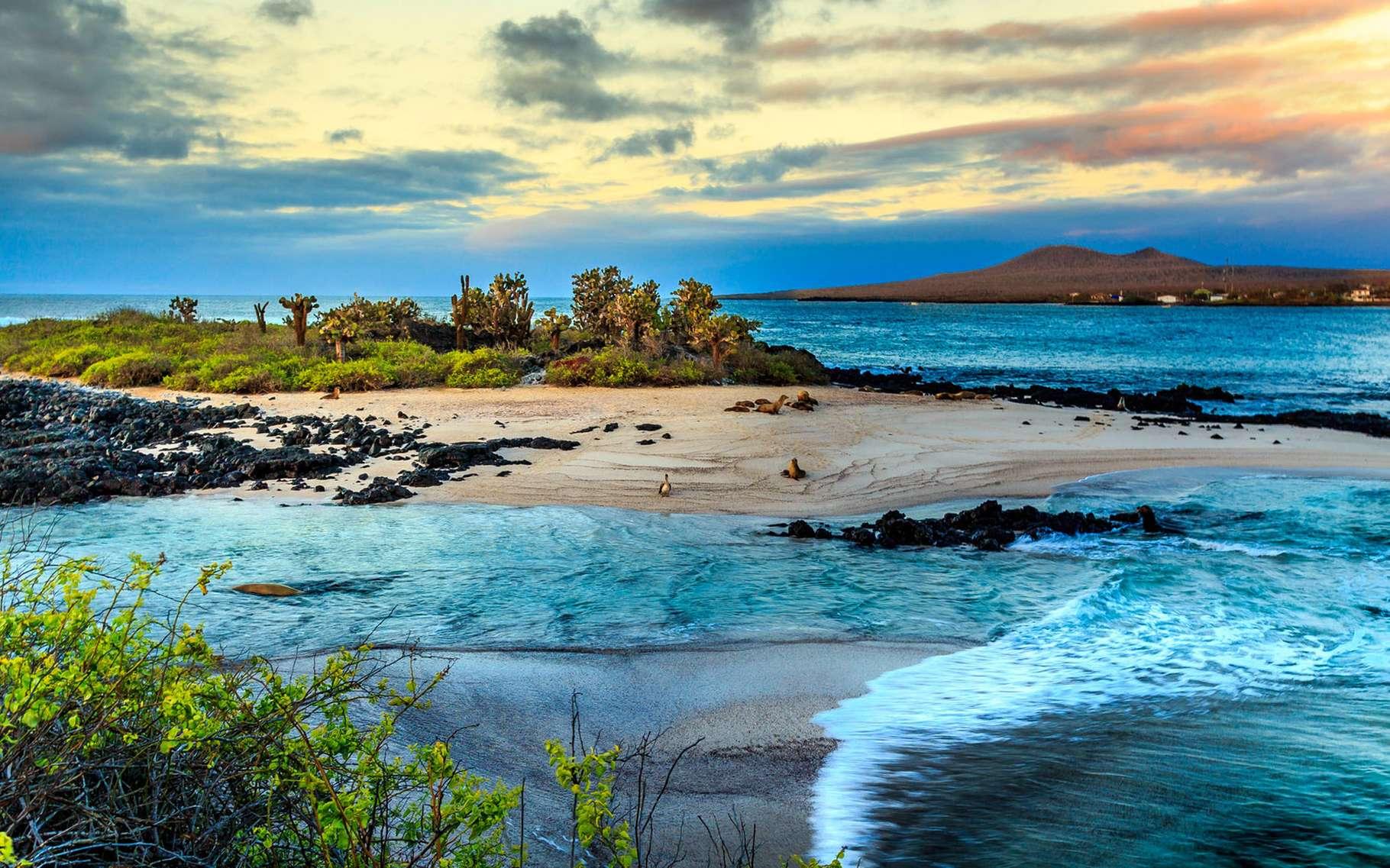 L'Équateur est un pays d'Amérique du Sud, blotti entre le Pérou et la Colombie. Il compte dans son territoire les Îles Galapagos, situées dans l'océan Pacifique. Cet archipel d'îles volcaniques et d'îlots est un joyau inscrit au patrimoine de l'Unesco dès 1978. Son isolation à plus de 1.000 km du continent sud-américain a, entre autres, permis le développement d'une faune et d'une flore endémiques, des espèces qui sont notamment protégées au sein de la réserve marine des Galapagos et du parc national des Galapagos. L'Unesco parle d'un « musée vivant et une vitrine de l'évolution » qui aurait inspiré à Charles Darwin sa théorie de l'évolution.© Rene, Adobe Stock