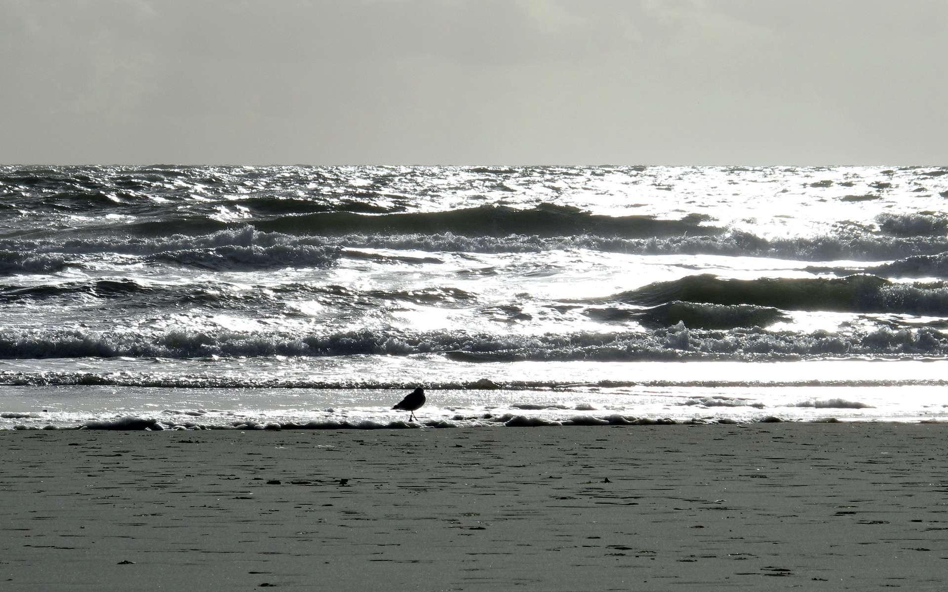 La hausse du niveau de la mer est un problème majeur. Nombre de villes se situent sur les littoraux. Si l'on en croit les dernières prévisions du Giec, le niveau moyen des océans devrait s'élever de 18 à 59 cm d'ici 2100. © Belladonna, cc by nc sa 3.0