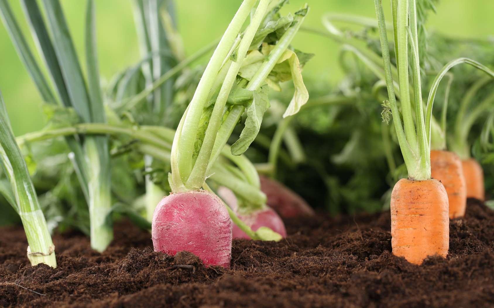Quels sont les bénéfices de l'agriculture biologique ? © Markus Mainka, Fotolia