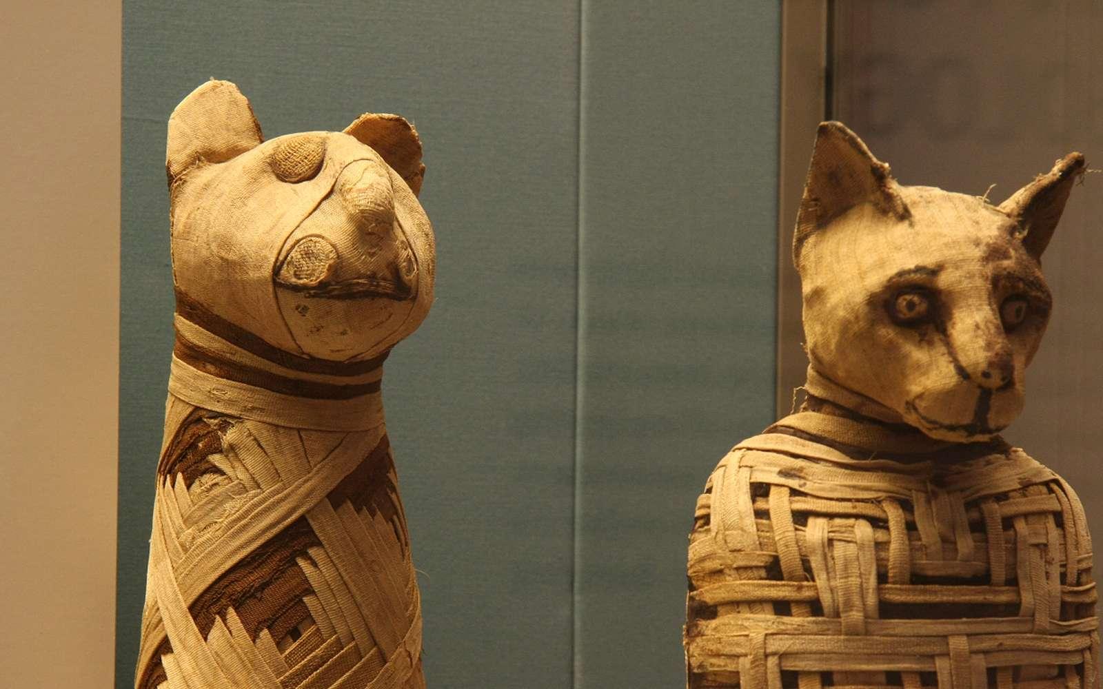 Momies animales égyptiennes. © Mario Sánchez, British museum, CC by-sa 2.0