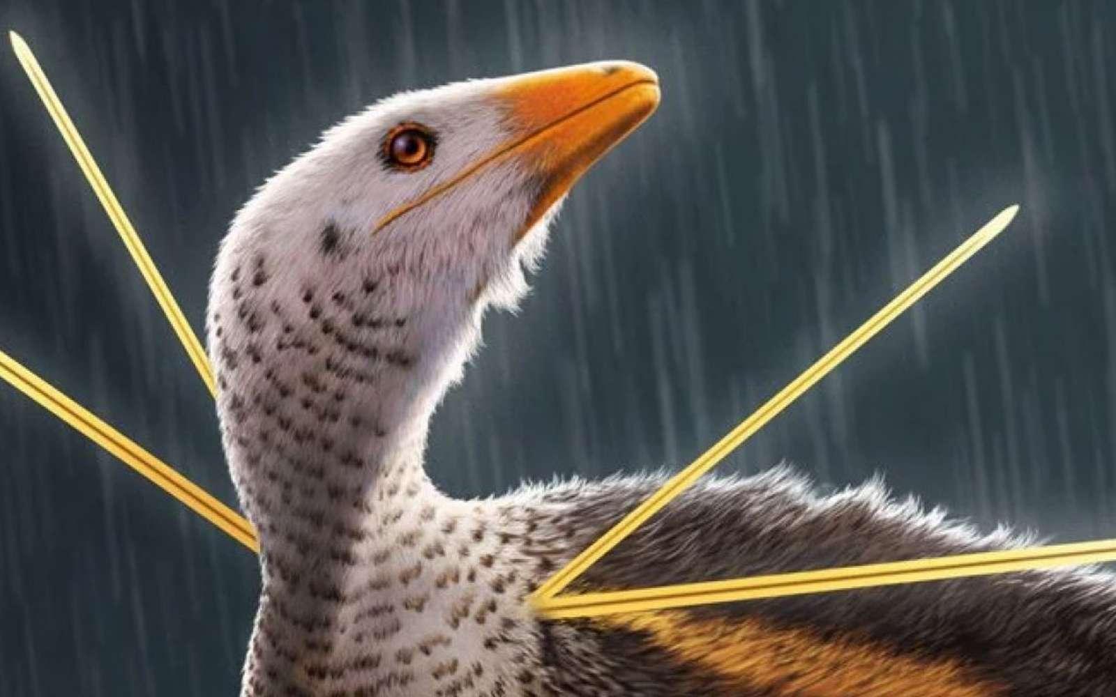 Ubirajara jubatus, un dinosaure à fourrure du Gondwana. © Bob Nicholls, Paleocreations.com 2020