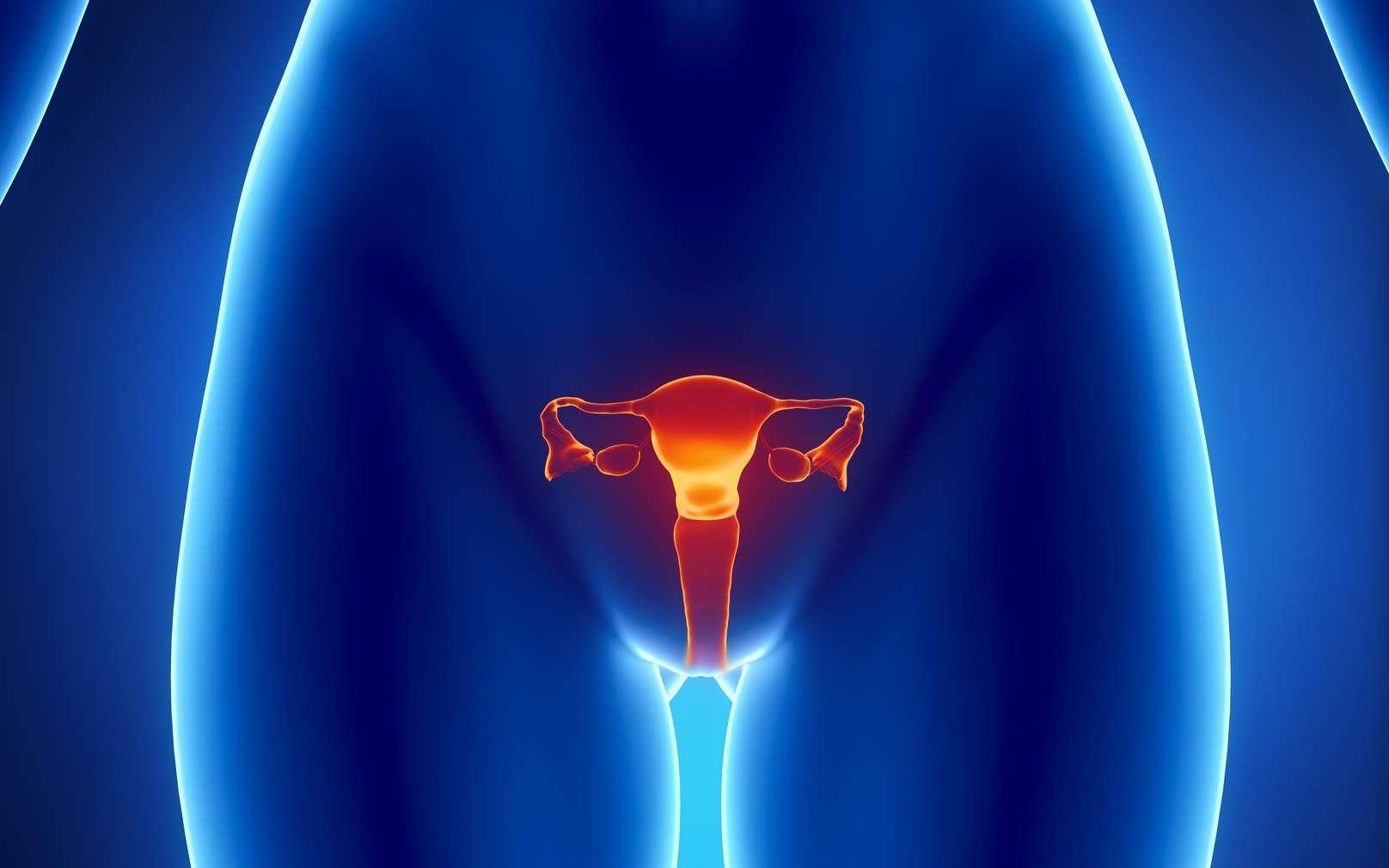 Le cancer de l'endomètre, ou cancer du corps de l'utérus, touche plutôt des femmes ménopausées. © CLIPAREA.com, Fotolia