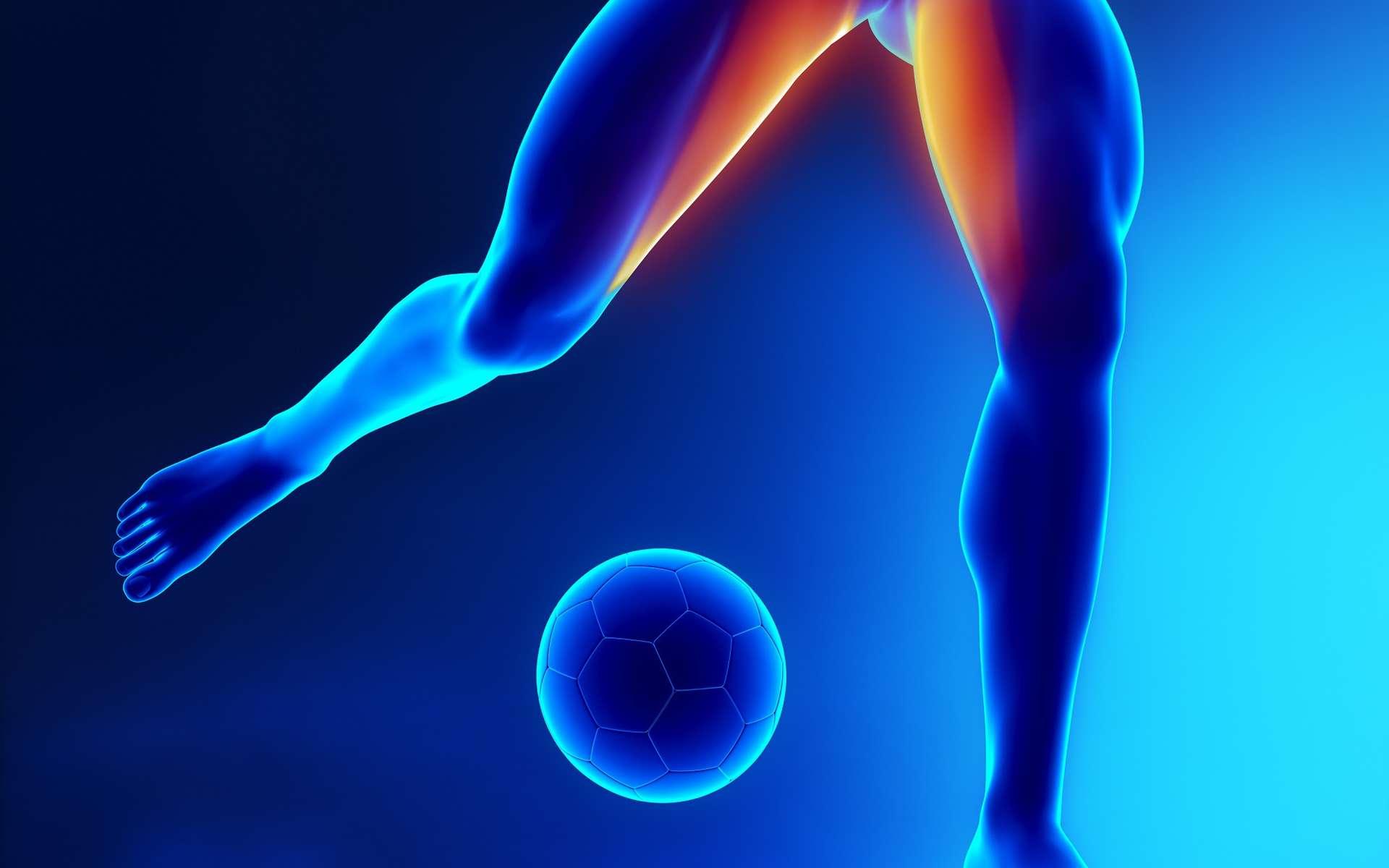 Le grand adducteur est un muscle qui permet de rapprocher une jambe de l'autre. Les blessures aux adducteurs sont fréquentes chez les sportifs comme les footballeurs. © CLIPAREA l Custom media, Shutterstock
