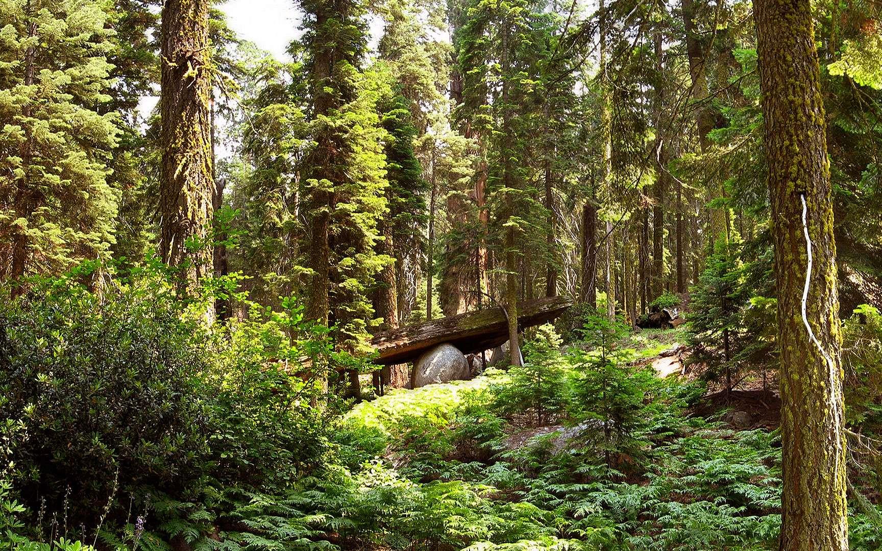 Forêt de Rambouillet. La forêt de Rambouillet, située dans le sud du département des Yvelines, est un des principaux massifs forestiers d'Île-de-France. Il s'agit d'un espace boisé de 200 km², dont 14 550 ha de forêt domaniale, qui s'étend sur le territoire de 29 communes. Le peuplement est constitué principalement de chênes, à hauteur de 68 %, et de résineux (pin sylvestre et pin laricio) pour 25 %. Ce massif comporte des étangs, des zones rocheuses, des étendues de sable, des vallons et des cascades. Une partie de la forêt se trouve dans le parc naturel régional de la haute vallée de Chevreuse. © Pline GNU Free Documentation License version 1.2